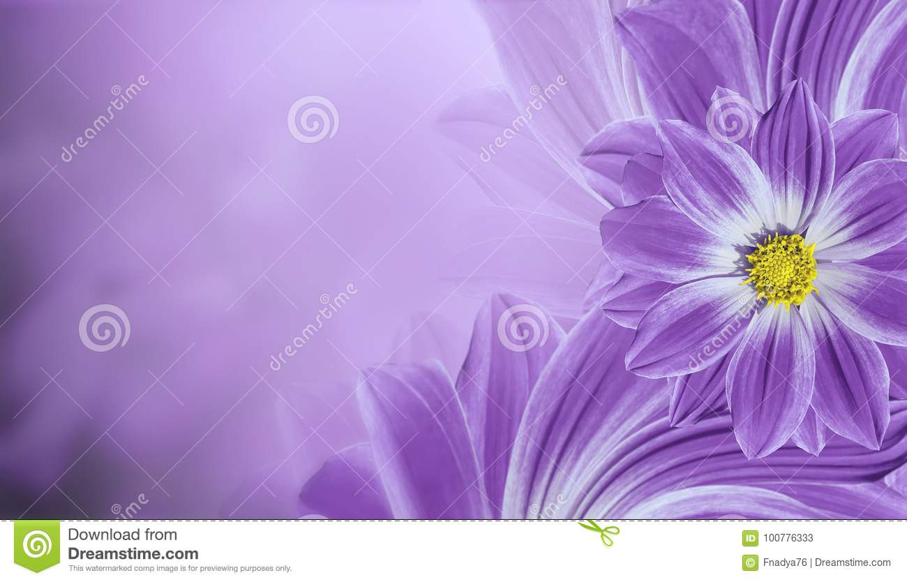 Floral Violet Beautiful Background Flower Composition Of Flowers
