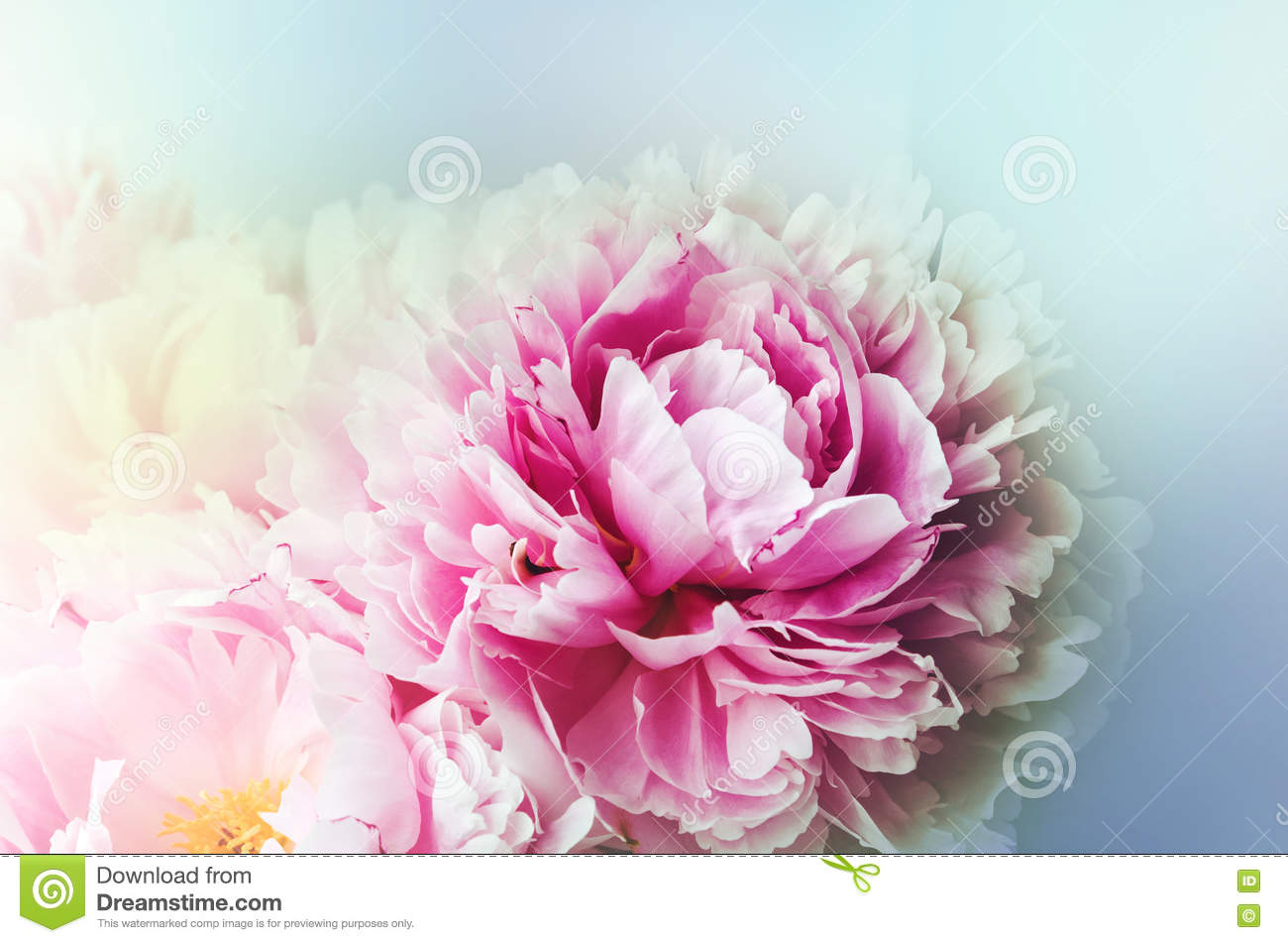 Floral Wallpaper Background From Flower Petals Trend Colors Pink