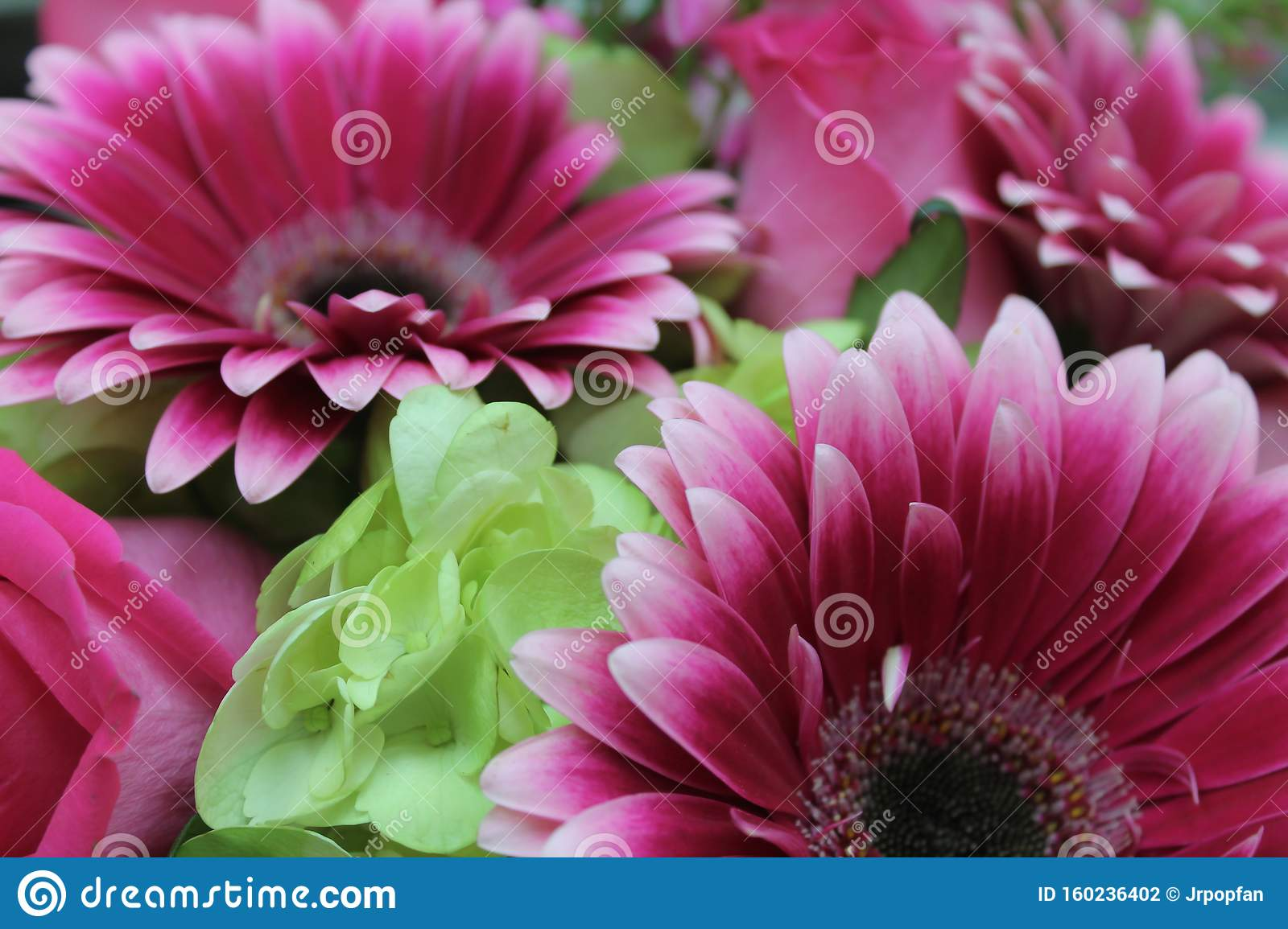 Hot Pink Gerbera Daisies Green Hydrangea Stock Photo Image Of