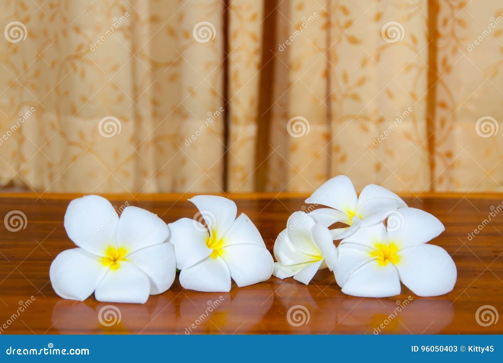 Flore blanche de Pudica de Plumeria