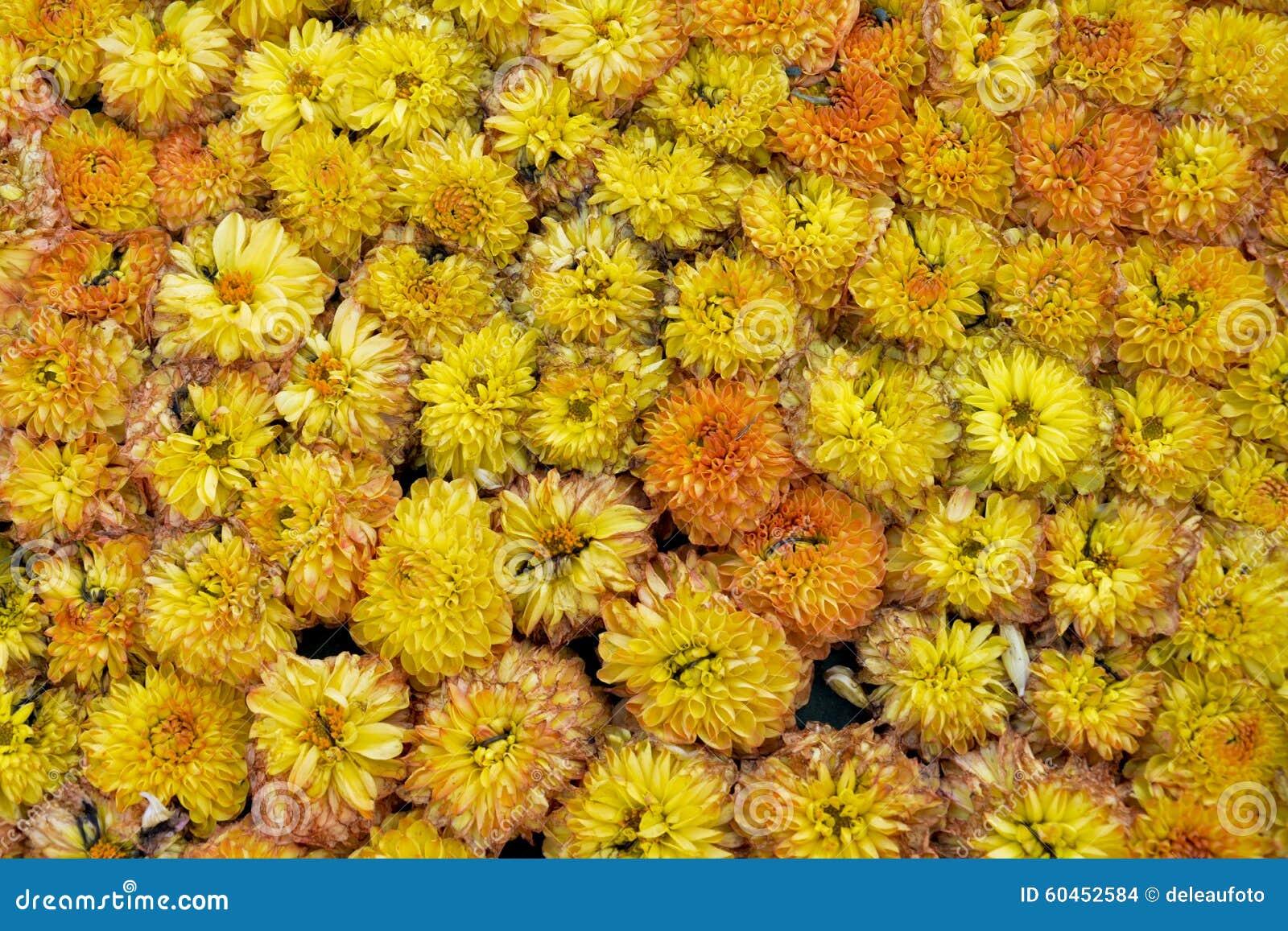 Florece hermoso minúsculo de la floración anaranjada muchos