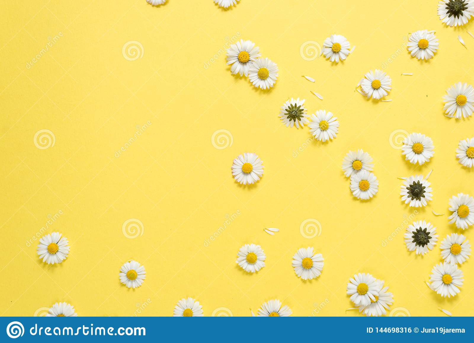 Florece la composici?n Flores de la manzanilla en fondo amarillo en colores pastel Primavera, concepto del verano