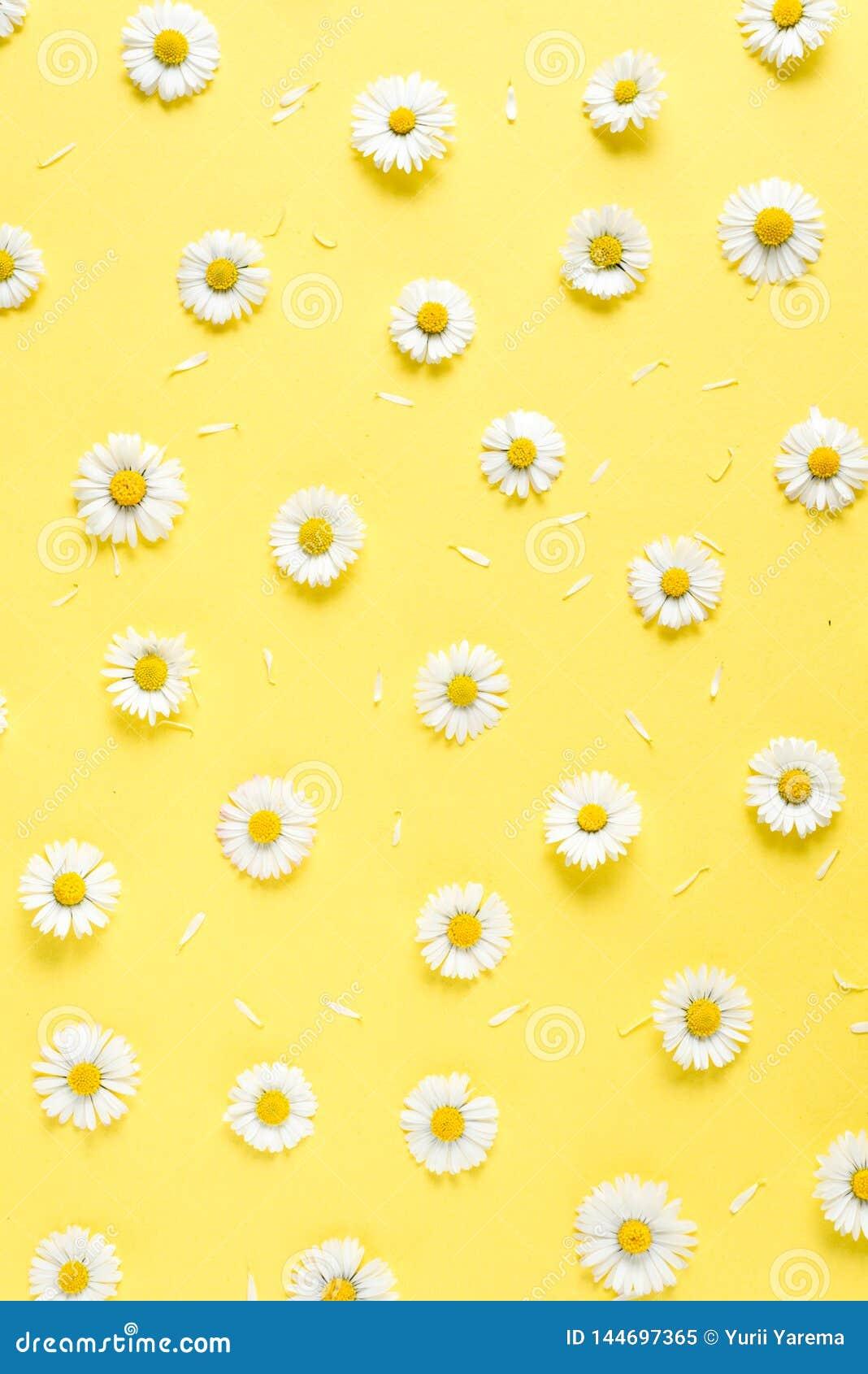 Florece la composici?n Modelo hecho de las manzanillas, p?talos en fondo amarillo en colores pastel Primavera, concepto del veran