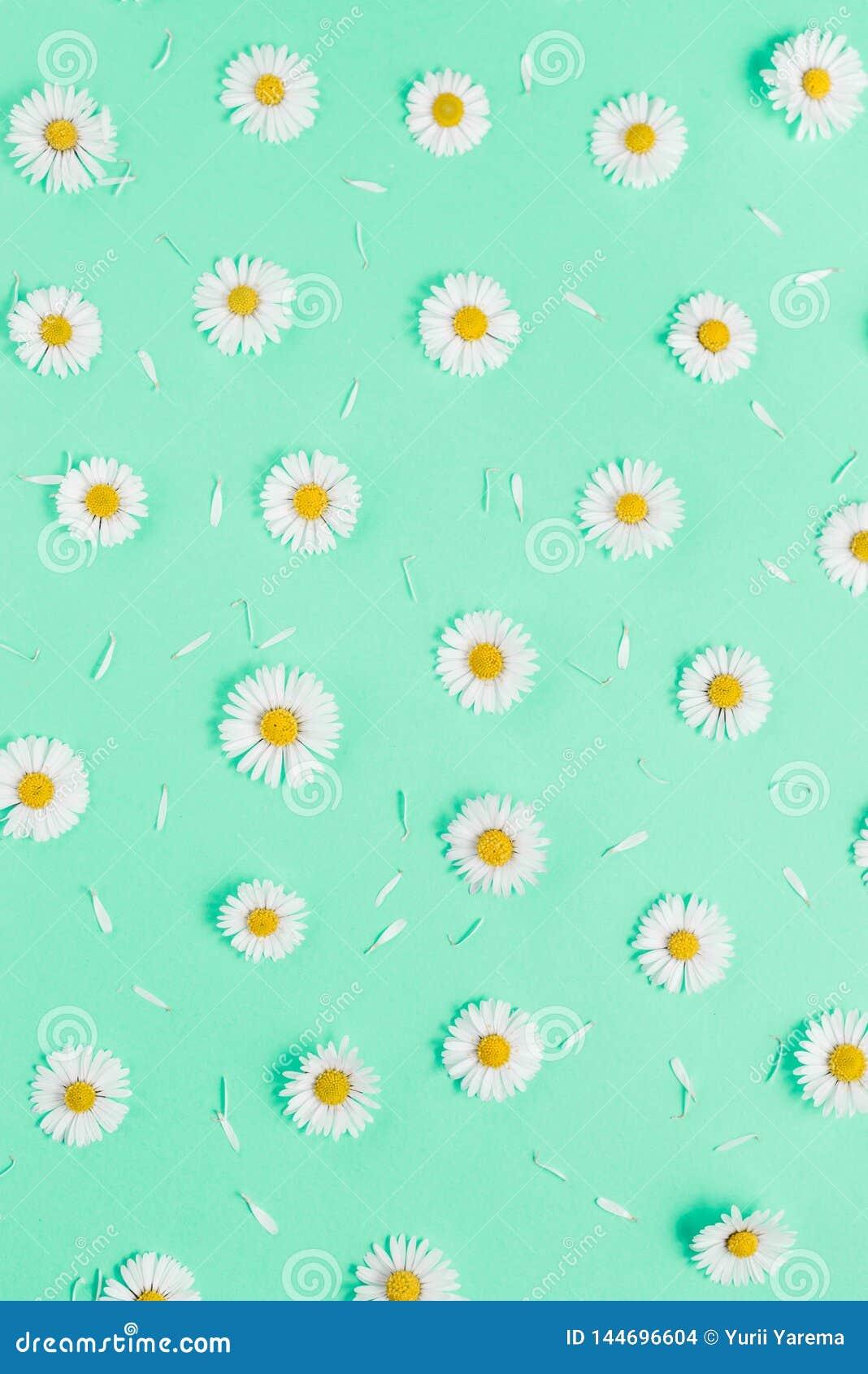 Florece la composici?n Modelo hecho de las manzanillas, p?talos en fondo verde en colores pastel Primavera, concepto del verano
