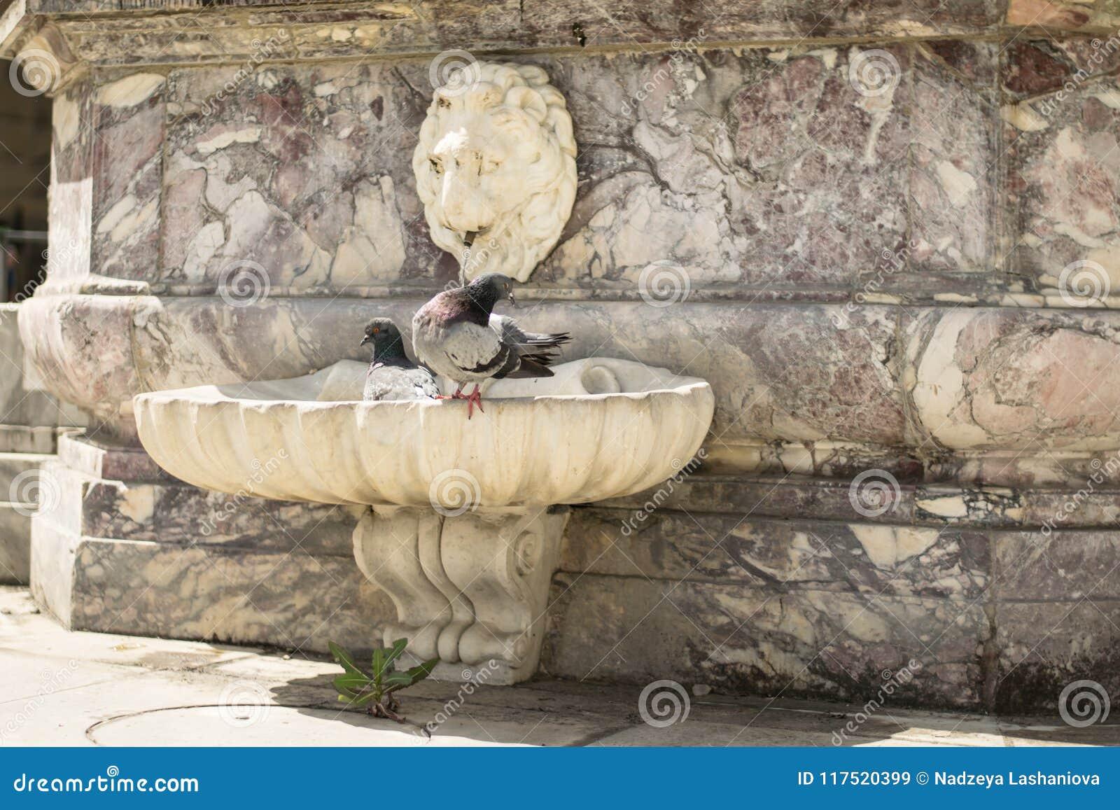 Florence Italien - 24 April, 2018: två duvor som kyler i en springbrunn nära basilikan av helgedomen, korsar