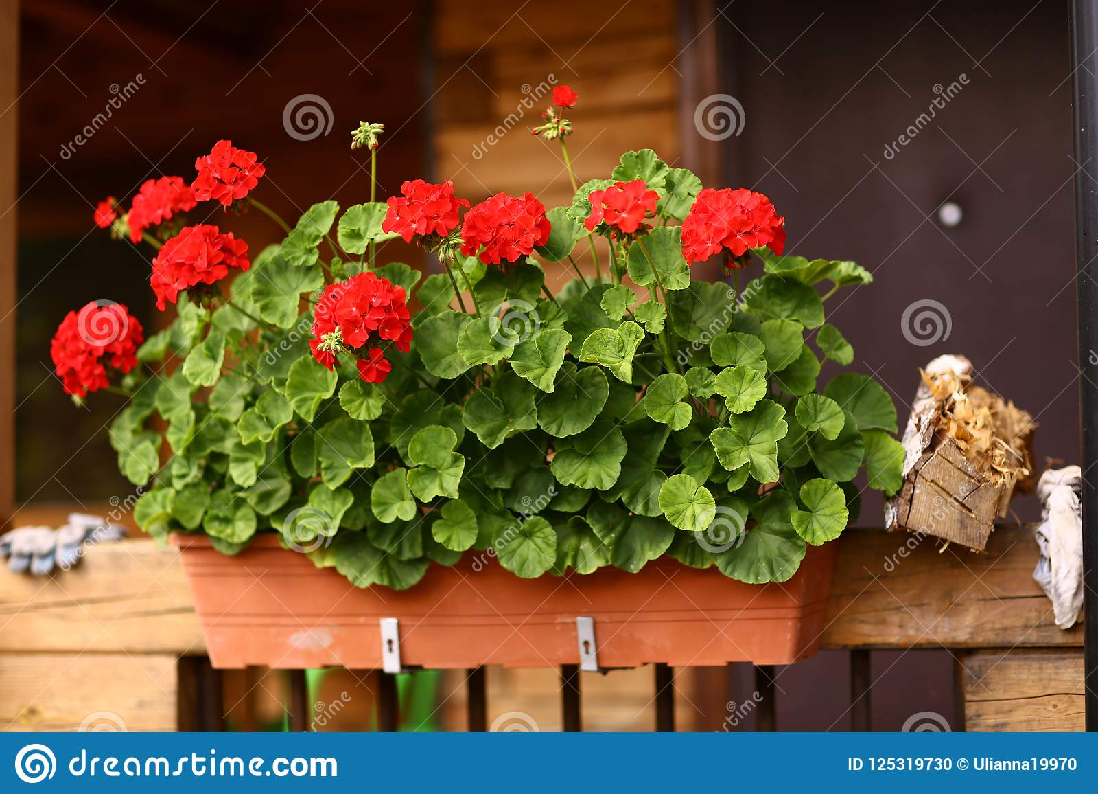 Floresça a caixa com as flores do gerânio no patamar da casa da casa de campo