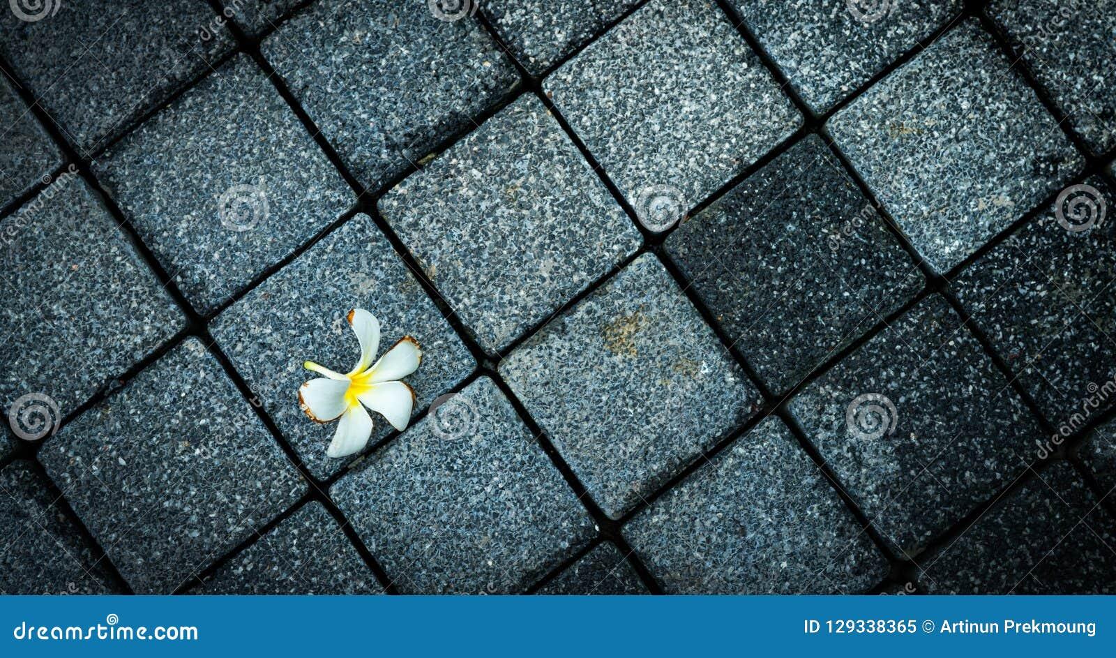 Floresça murcho na estrada concreta preta e cinzenta vazia Morreu e o fundo da morte Vista superior da flor murcho do Plumeria em