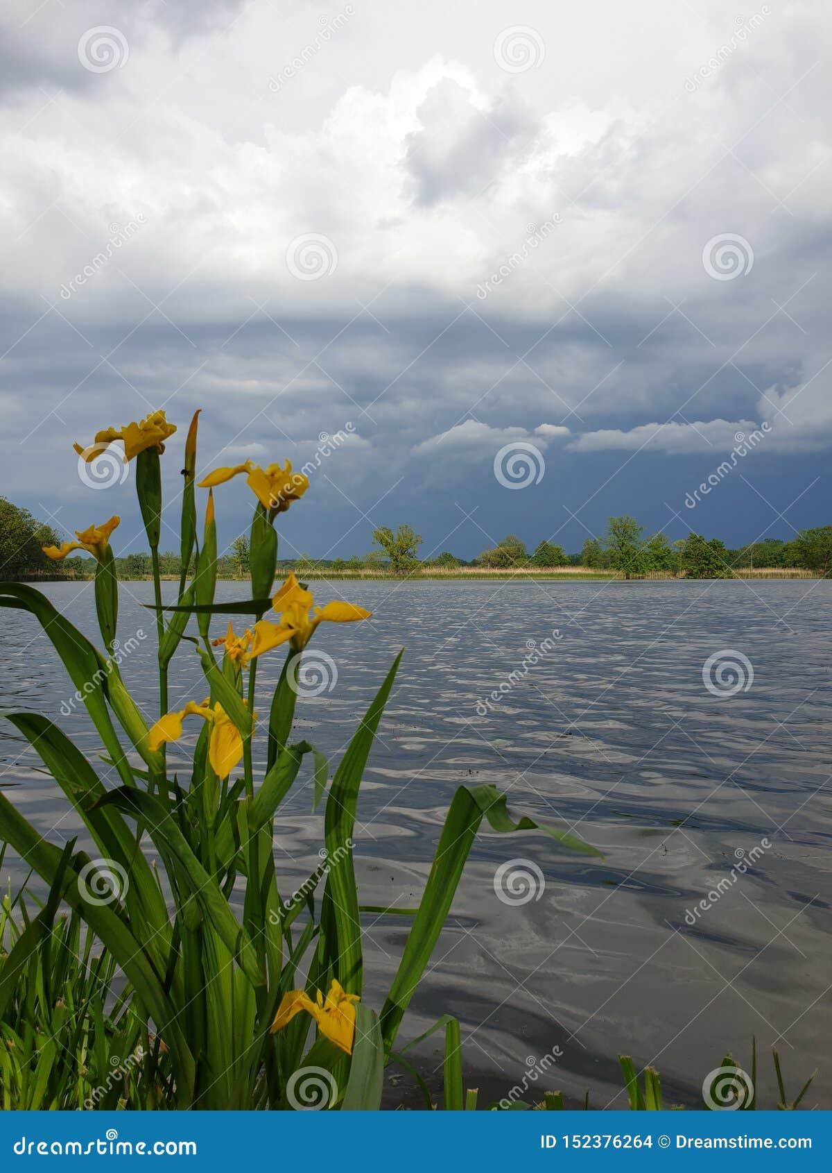 Flores, água e céu