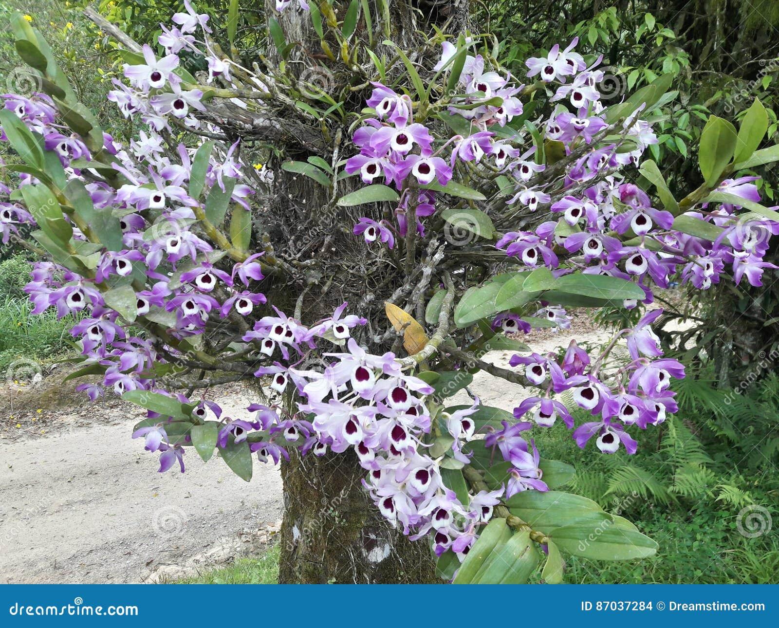 Flores Stock Foto Afbeelding Bestaande Uit Flores 87037284