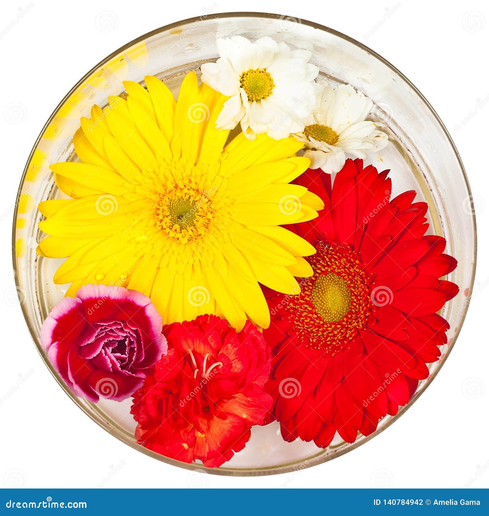 Flores aisladas con un fondo blanco