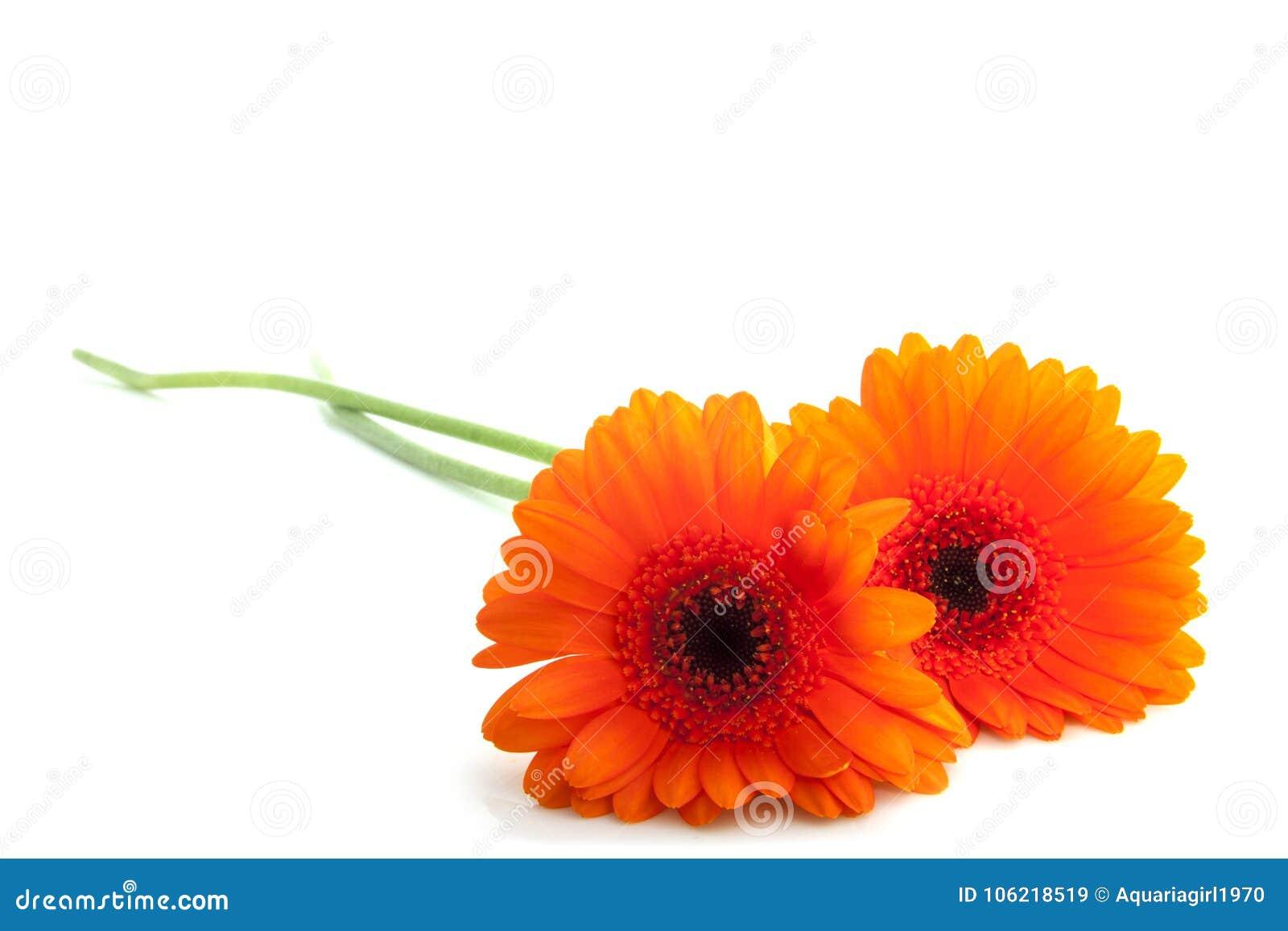 Flores alaranjadas bonitas