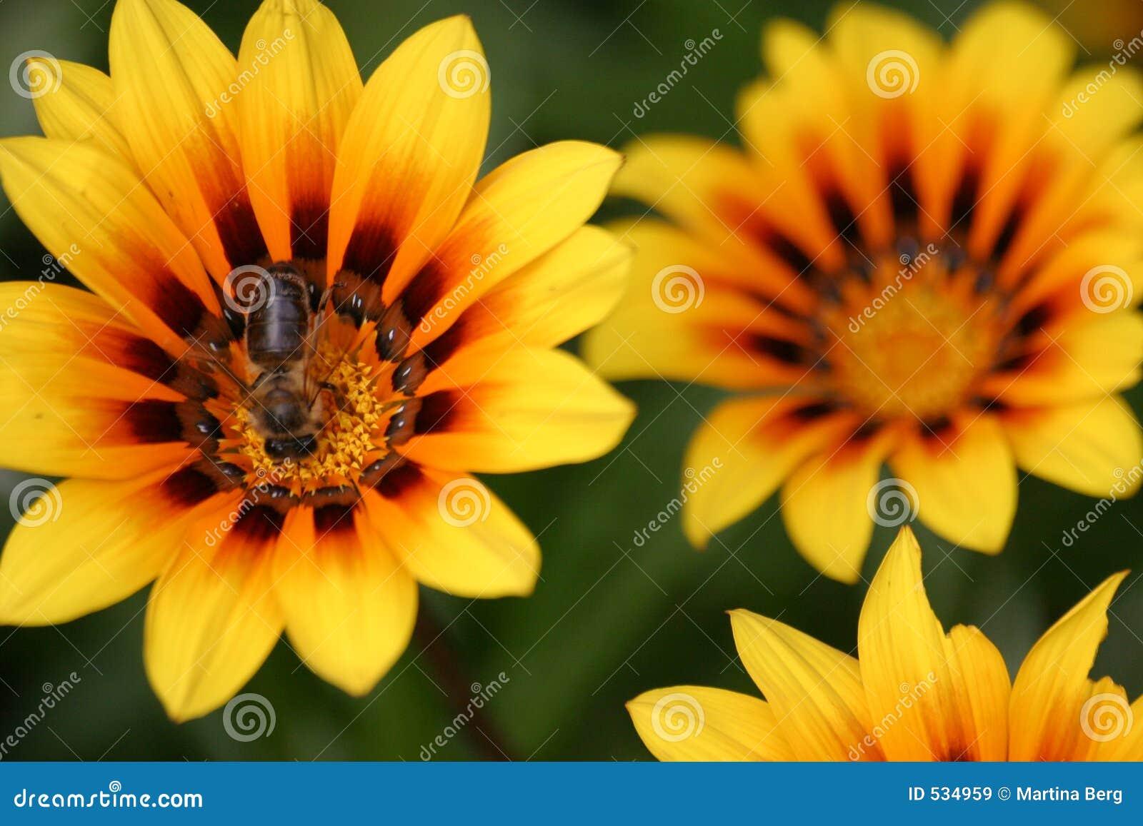 Flores amarelas com abelha