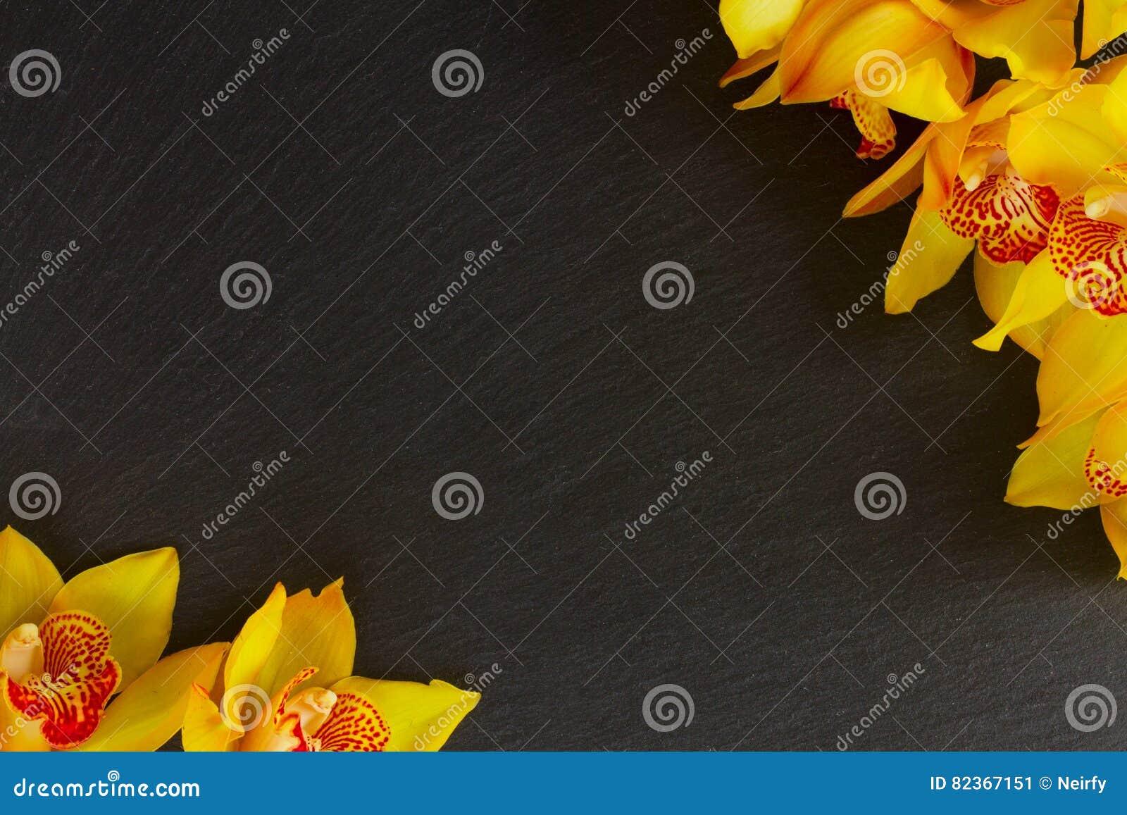 Flores amarelas da orquídea