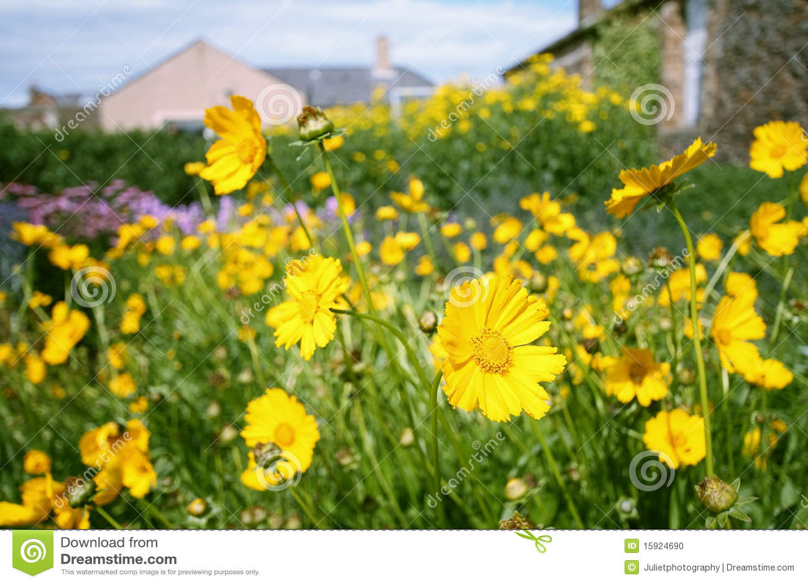 jardim rosas amarelas : jardim rosas amarelas:Yellow Flower Garden
