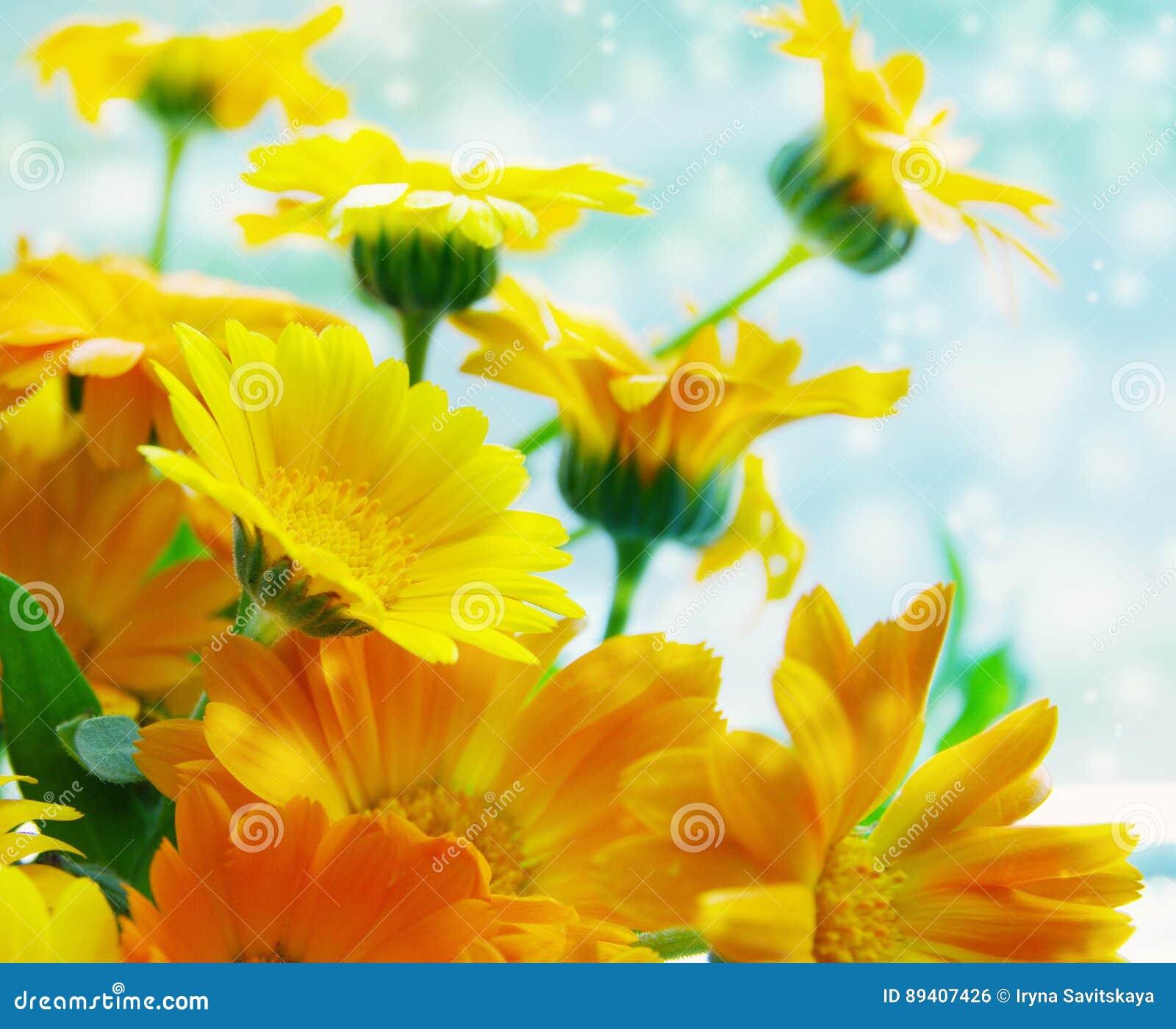 Flores amarelas do verão do ramalhete de um cravo-de-defunto