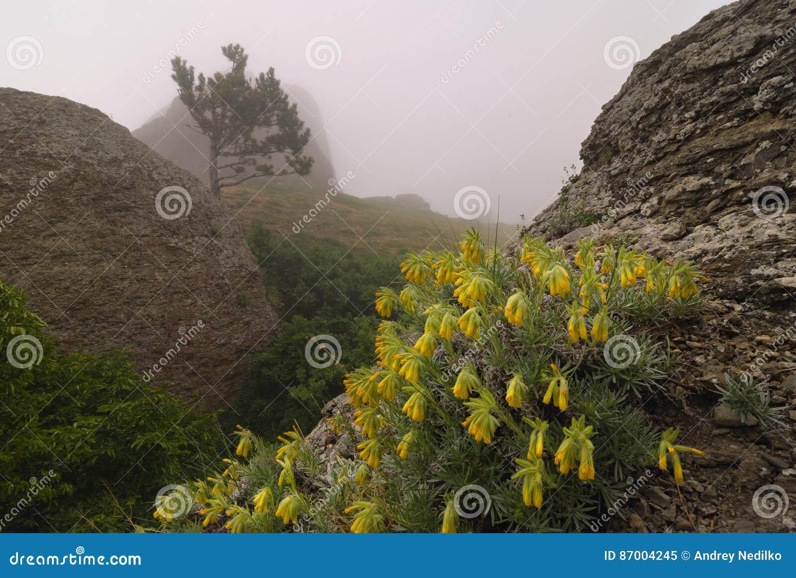 Flores amarelas entre as rochas