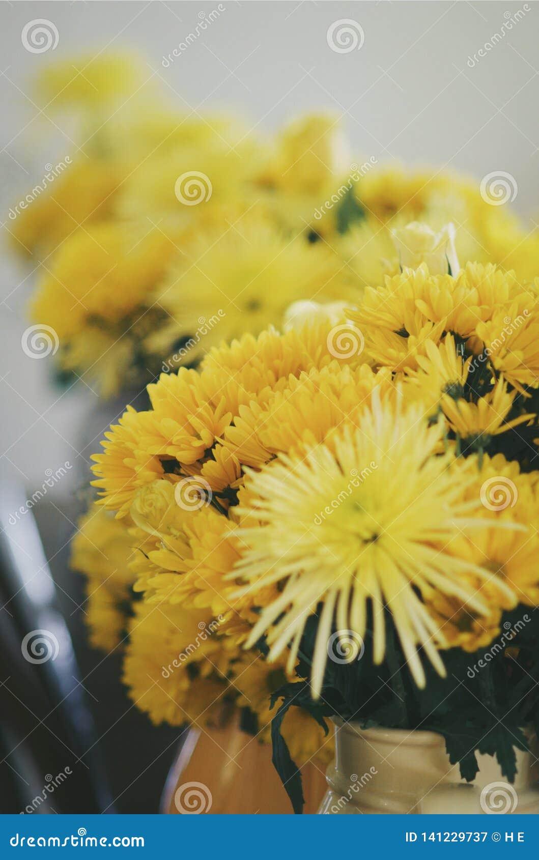 Flores amarelas no vaso