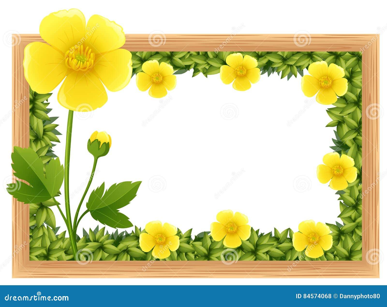Flores Amarillas Del Ranúnculo Como Diseño Del Marco Ilustración del ...