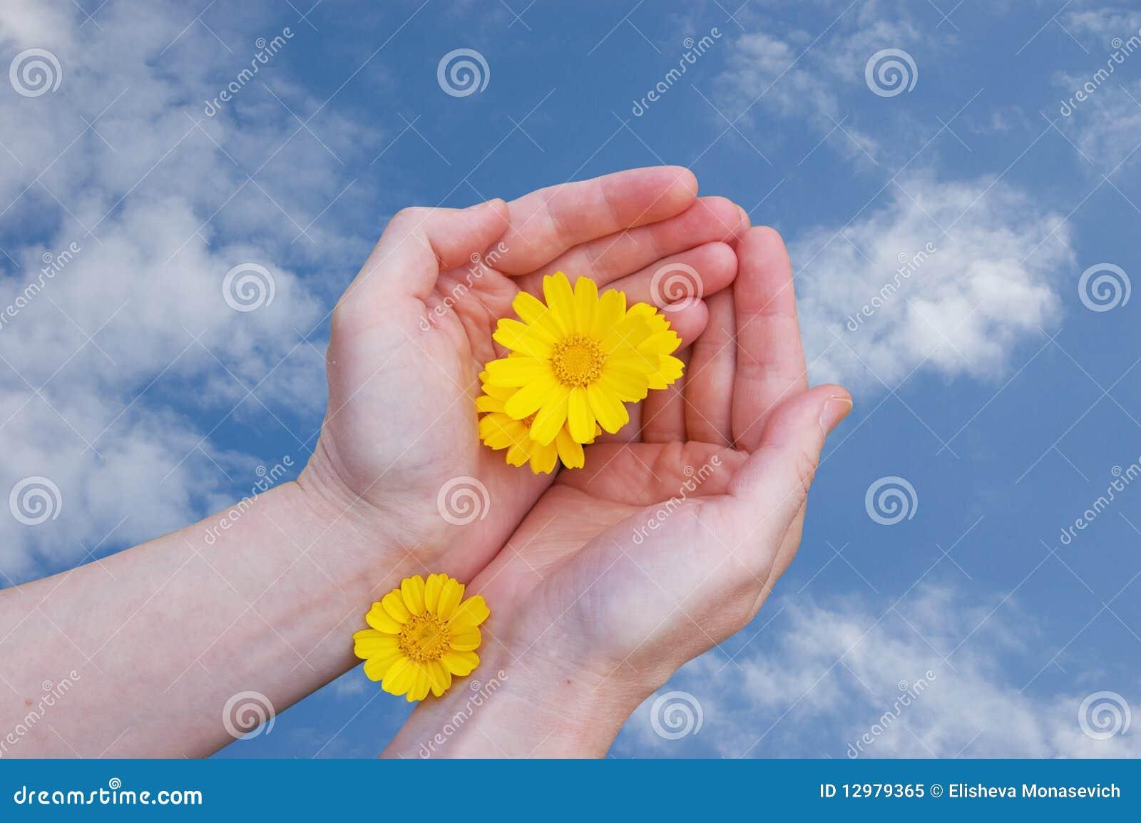 Flores Amarillas En Manos De La Mujer Imagen De Archivo