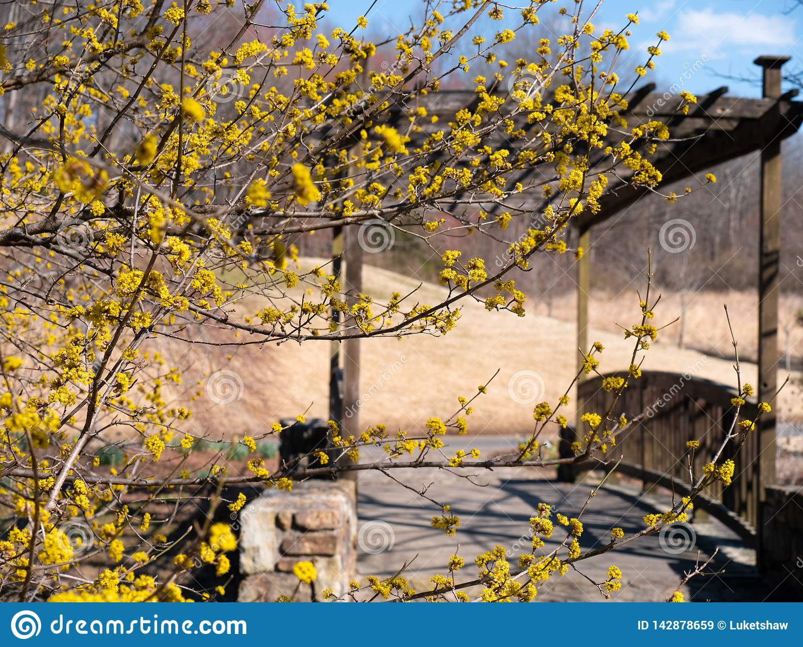 Flores amarillas hermosas y vibrantes que destacan la entrada a un tiempo y a un puente envejecido