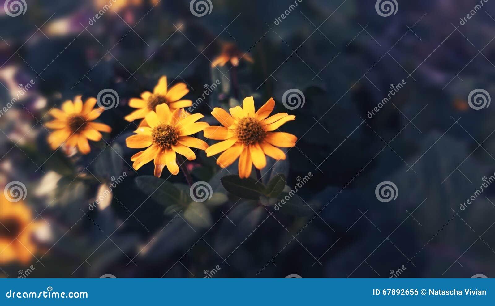 Flores amarillos