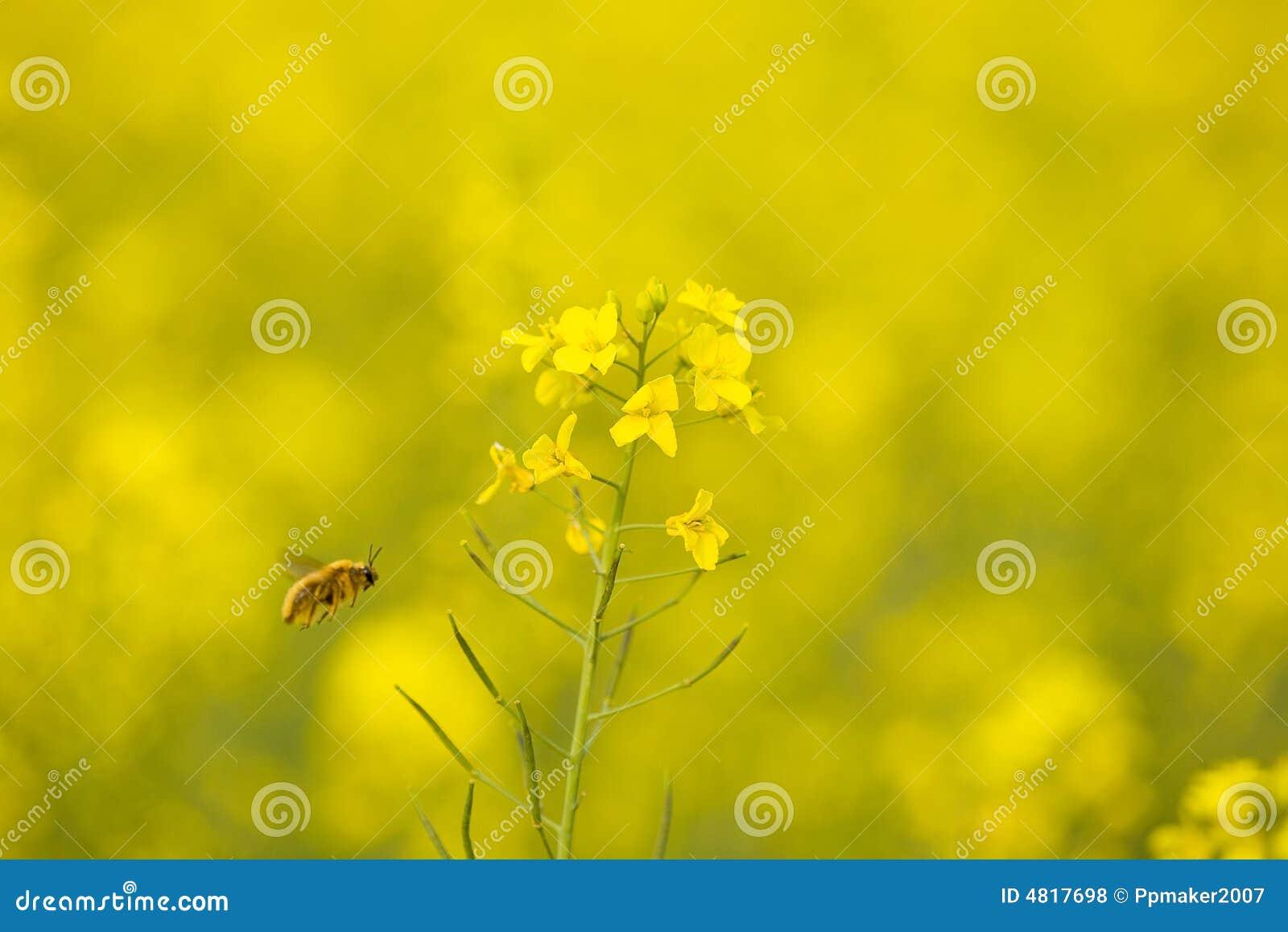 Flores & abelha do Cole
