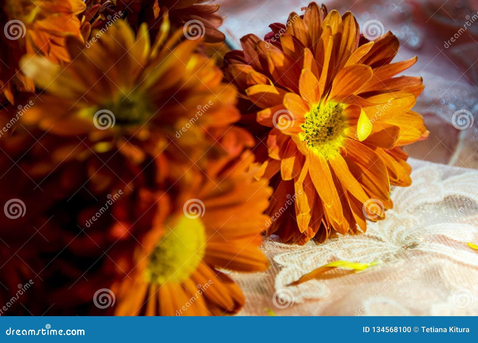 Flores anaranjadas hermosas que chispean en el sol