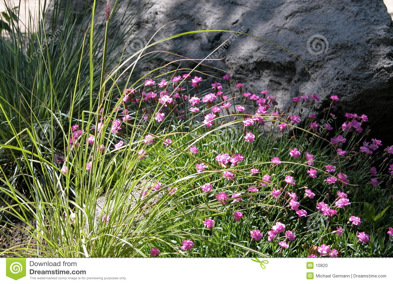 Flores antes da rocha