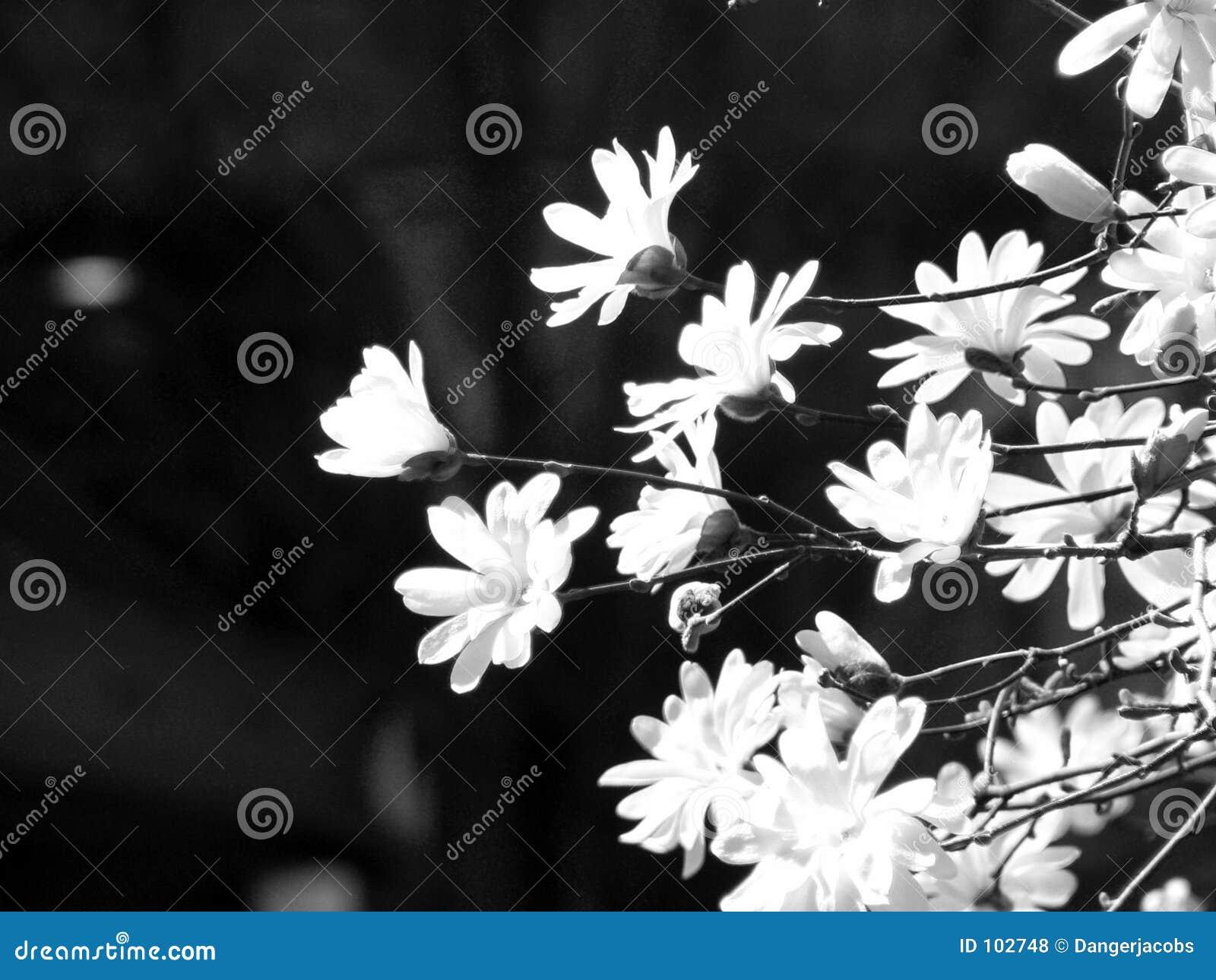 Flores artísticas preto e branco