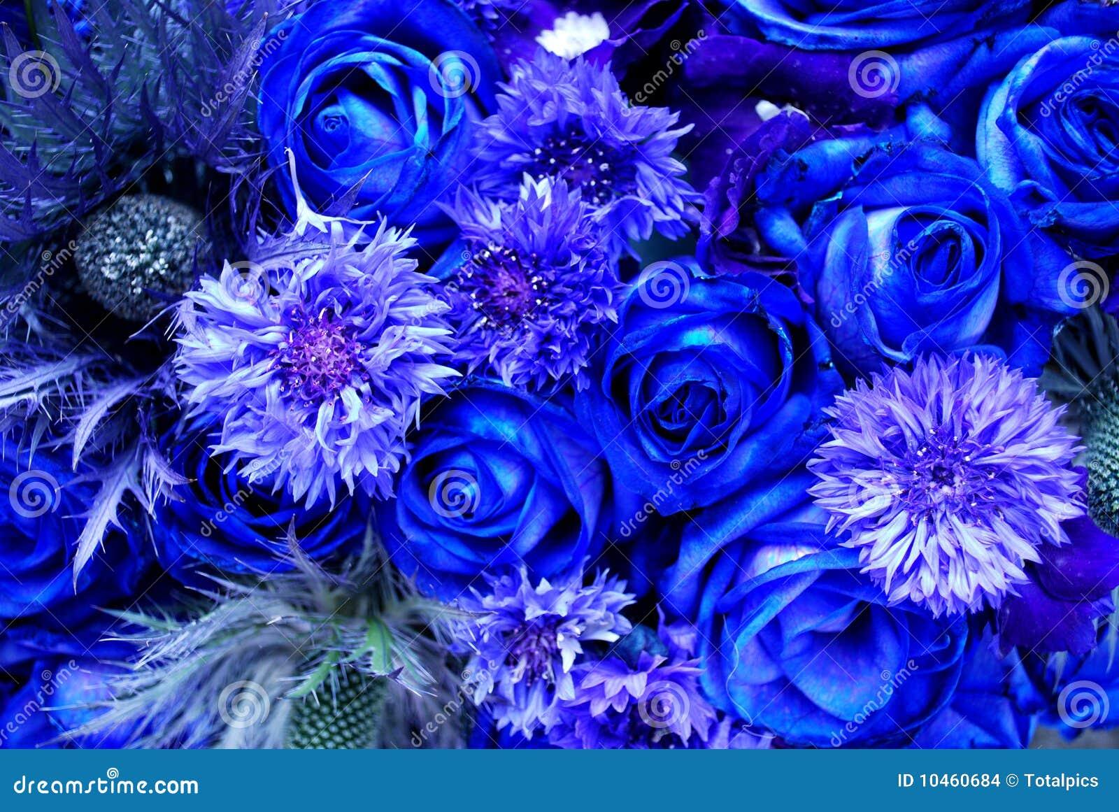 flores azuis foto de stock imagem de amor thistles 10460684. Black Bedroom Furniture Sets. Home Design Ideas