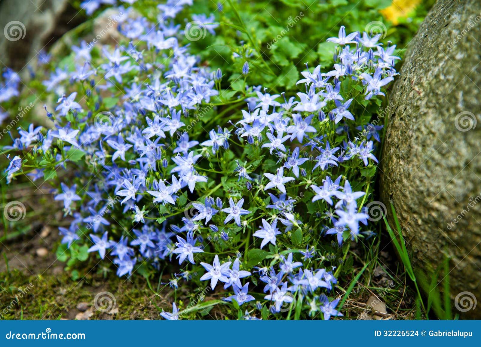 Download Flores azuis foto de stock. Imagem de fundo, cheerful - 32226524