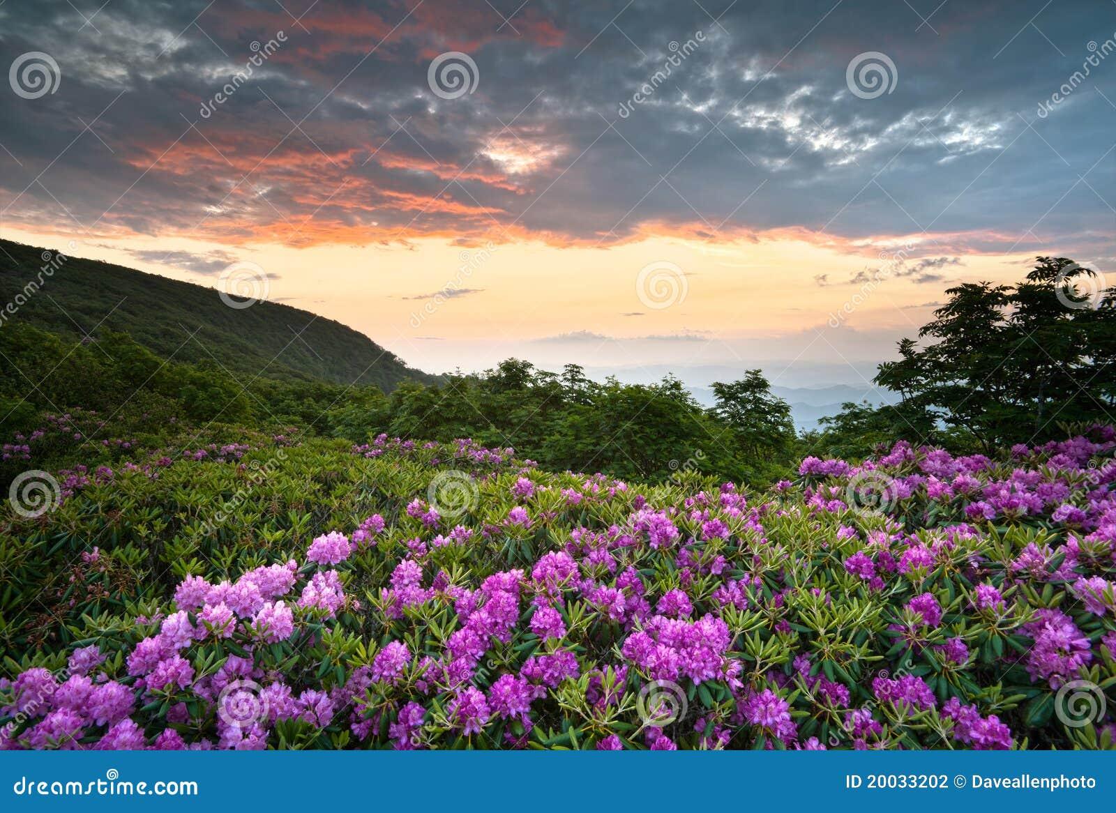 Flores azuis da mola do por do sol das montanhas do Parkway de Ridge