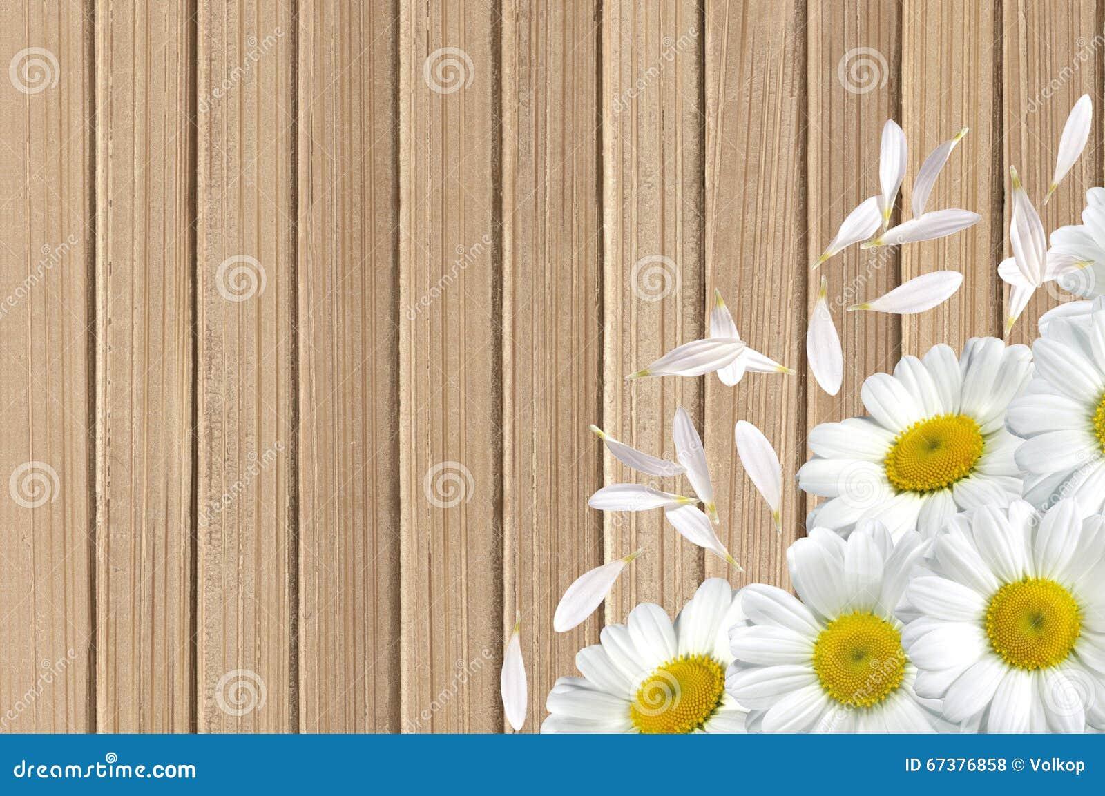 Fondo De Madera Vintage Con Flores Blancas Manzana Y: Flores Blancas De La Manzanilla En Fondo De Madera De La