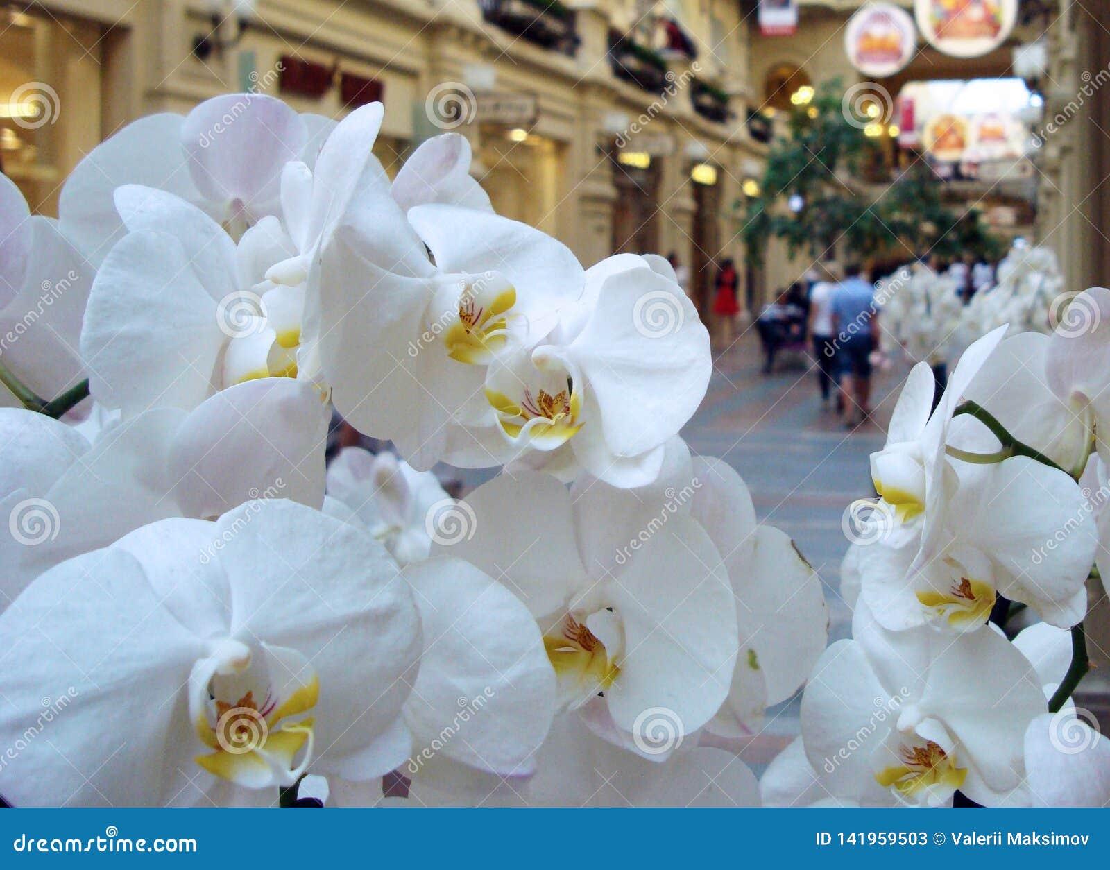 Flores blancas de la orquídea en el fondo de un centro comercial grande