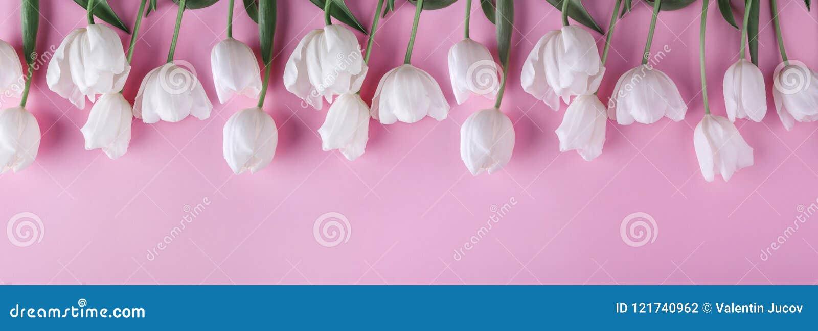 Flores blancas de los tulipanes sobre fondo rosa claro Tarjeta de felicitación o invitación de la boda