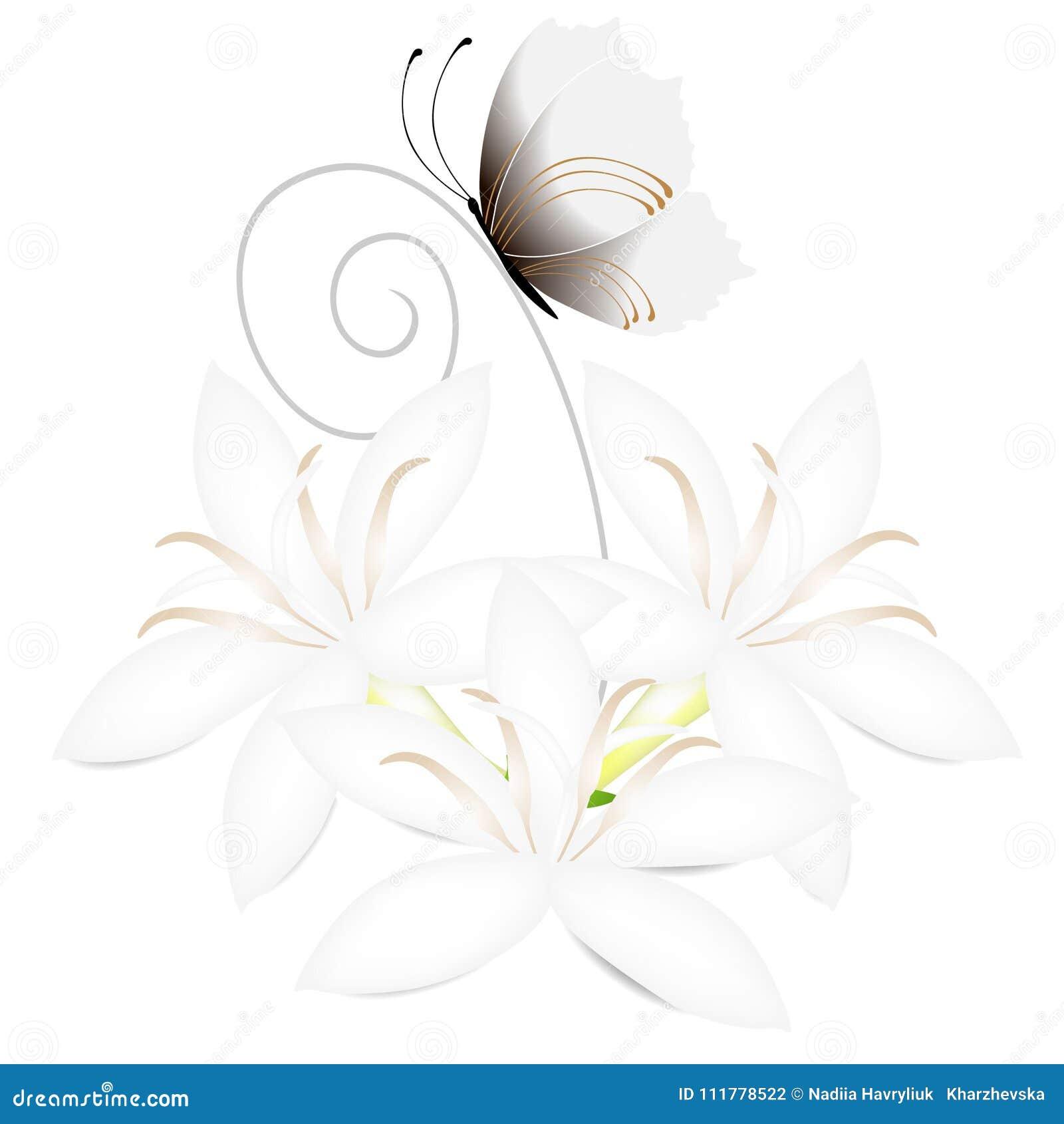 Flores blancas del cafeto con la mariposa aislada en el fondo blanco