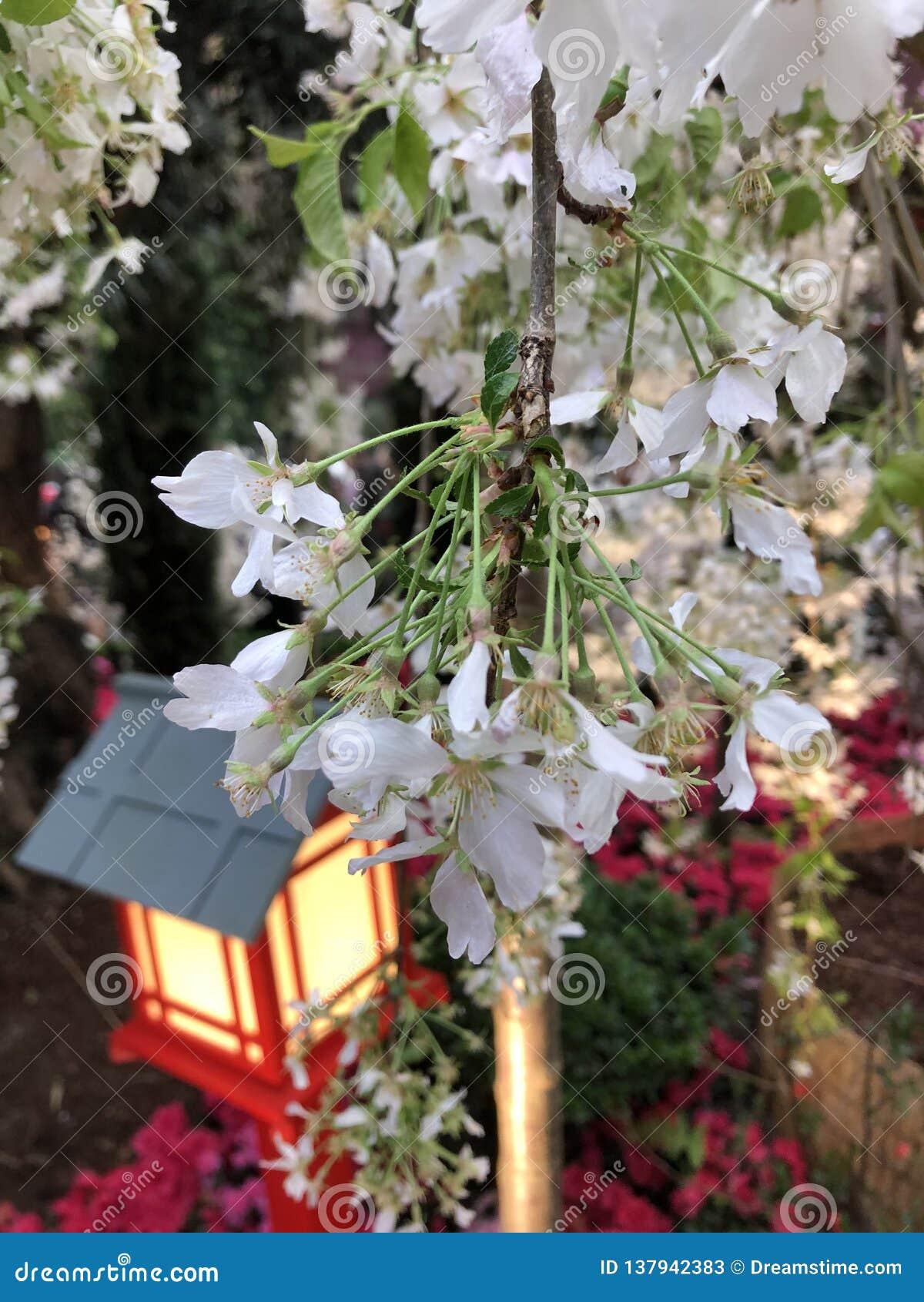 Flores blancas en los jardines por la bahía Singapur