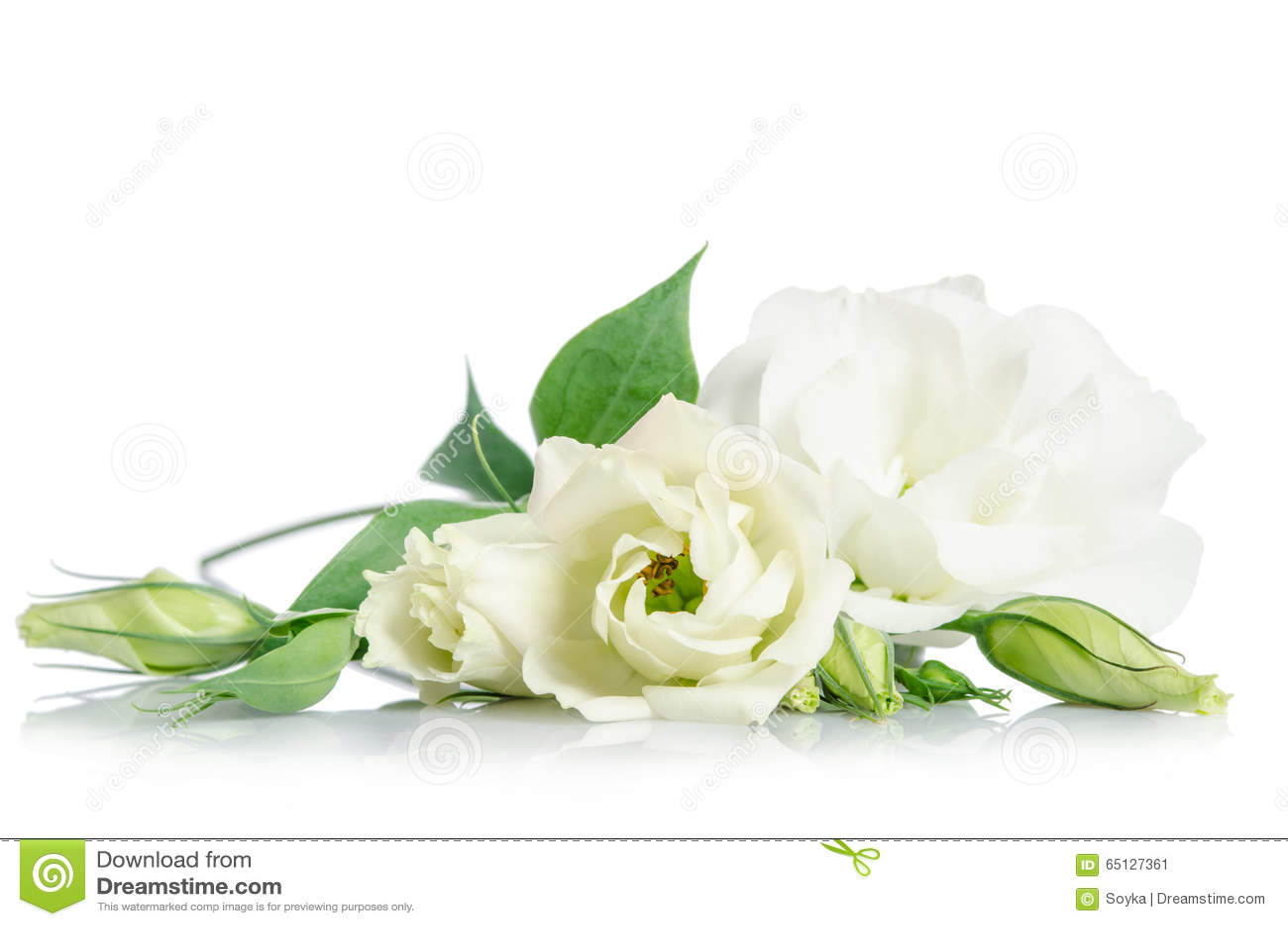 Imagenes Comunes Del Flores Blancas Hermosas Del Eustoma Los
