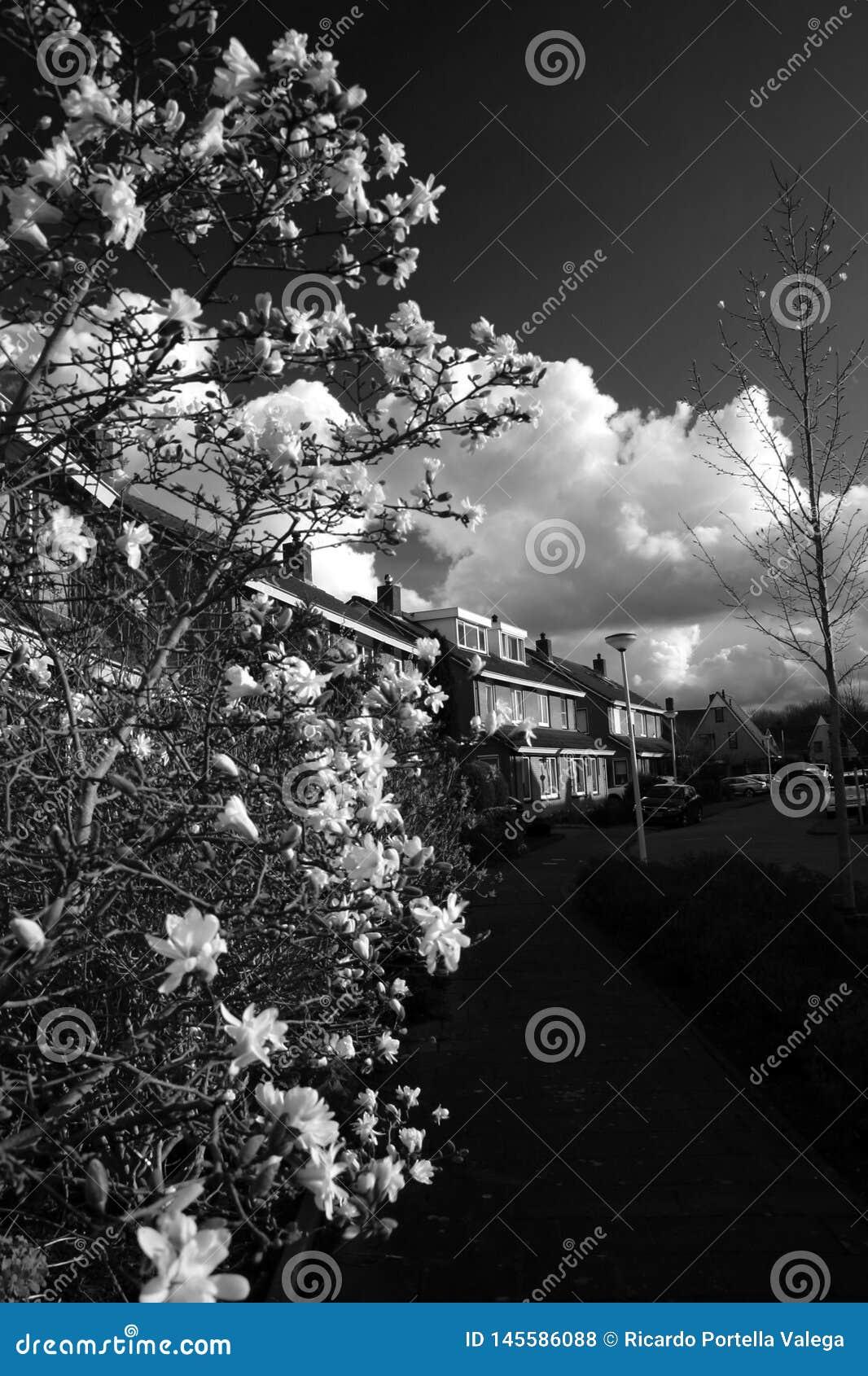 Flores blancas hermosas