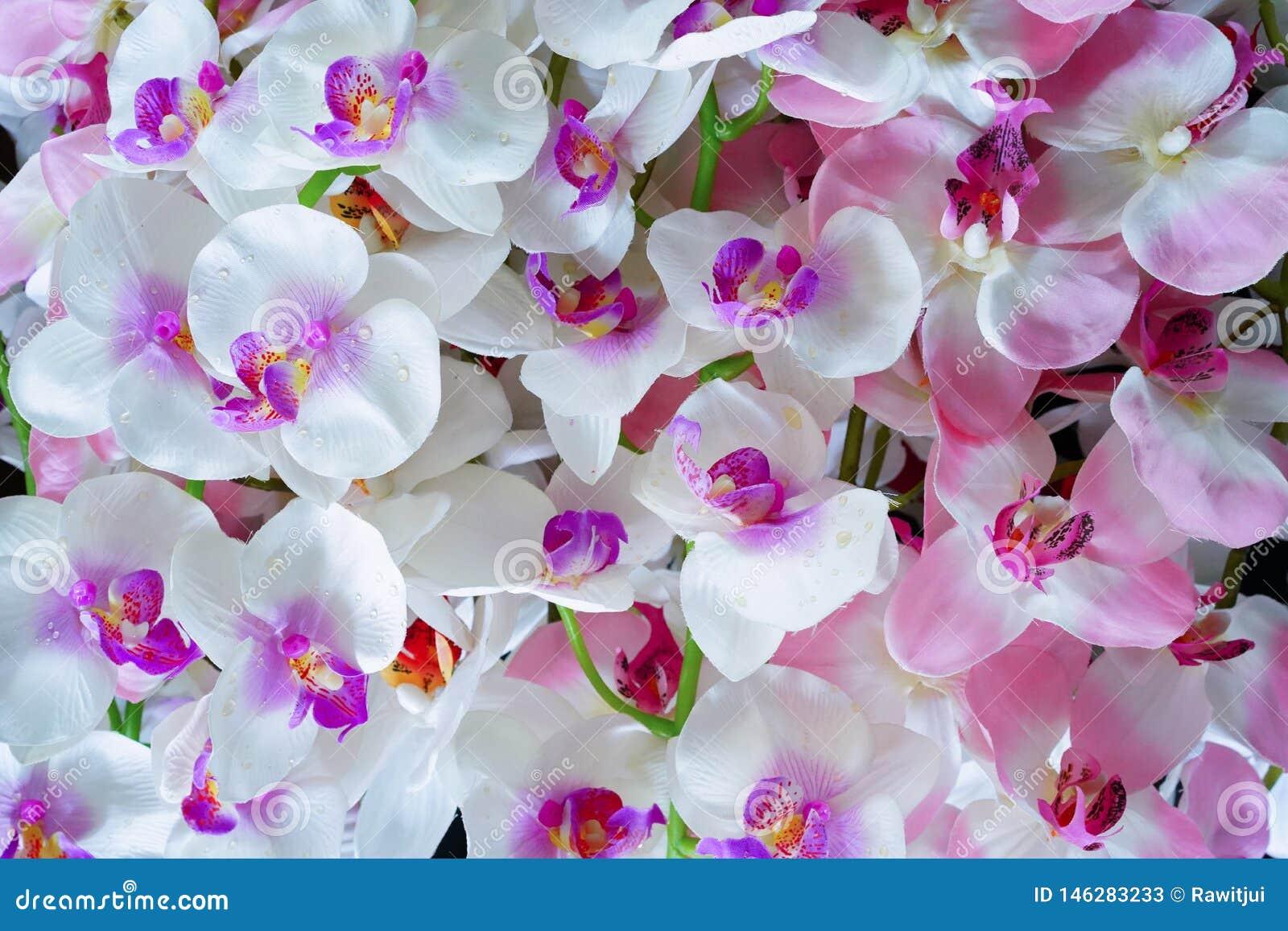Flores blancas y rosadas artificiales de la orquídea