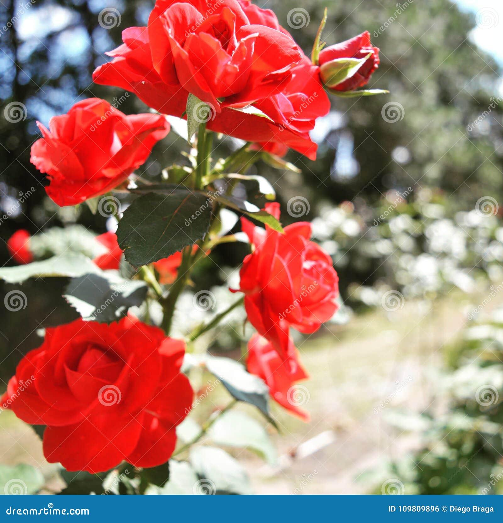 Flores Bonitas Foto De Archivo Imagen De Todo árbol