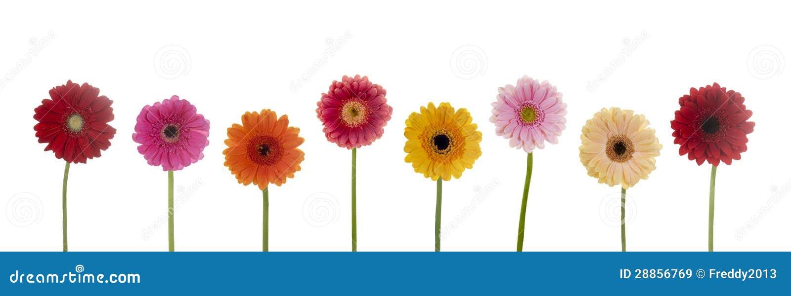 Flores bonitas imagen de archivo imagen de maneta elasticidad 28856769 - Fotos flores preciosas ...
