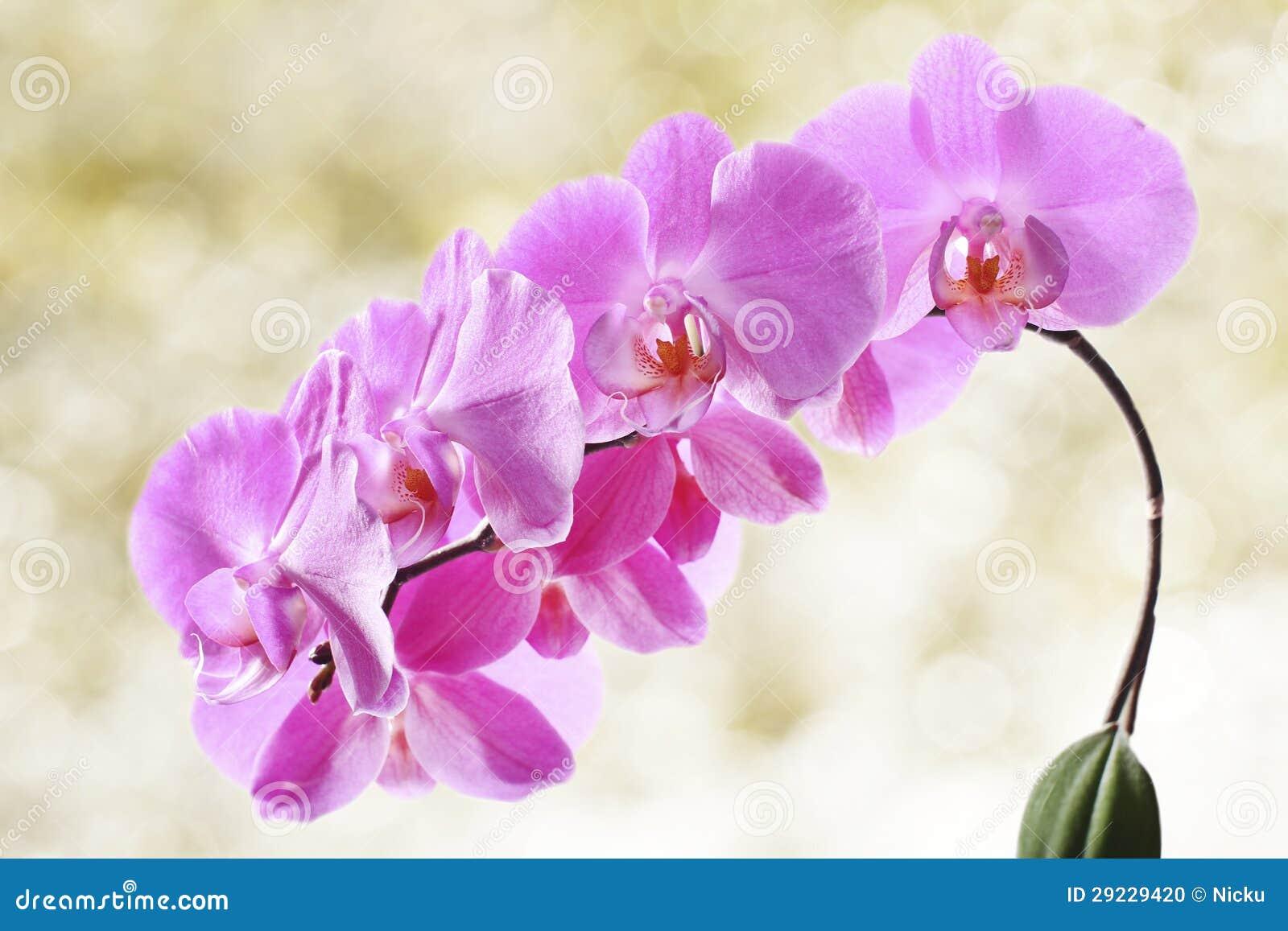 Download Flores bonitas da orquídea foto de stock. Imagem de decoração - 29229420