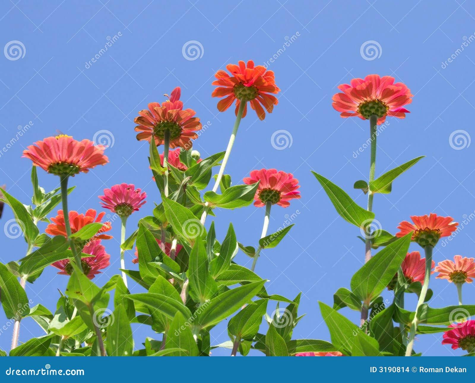 jardim bonito floresce  a foto com flores, Closeup da opinião da