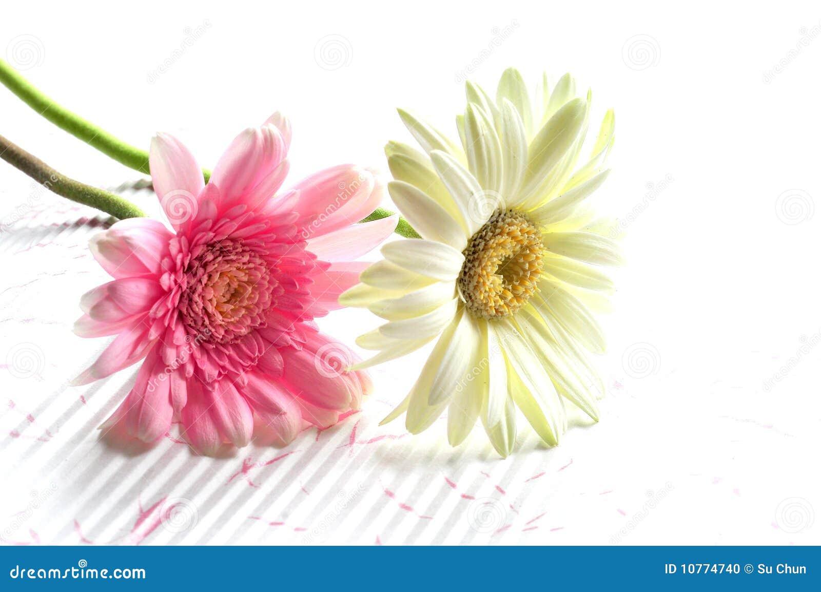 Flores bonitas en verano foto de archivo imagen 10774740 - Flores de verano ...