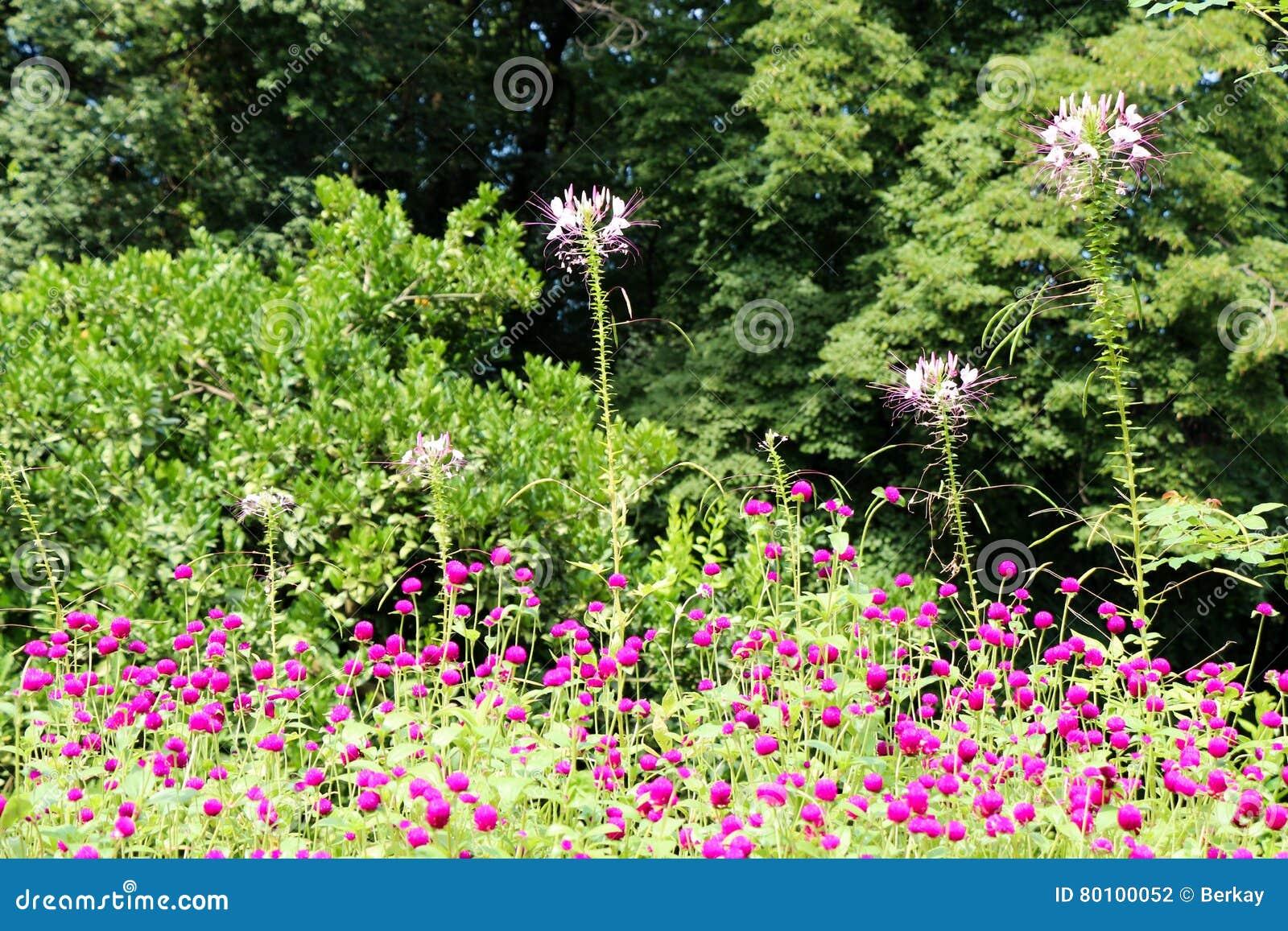 Flores bonitas na natureza