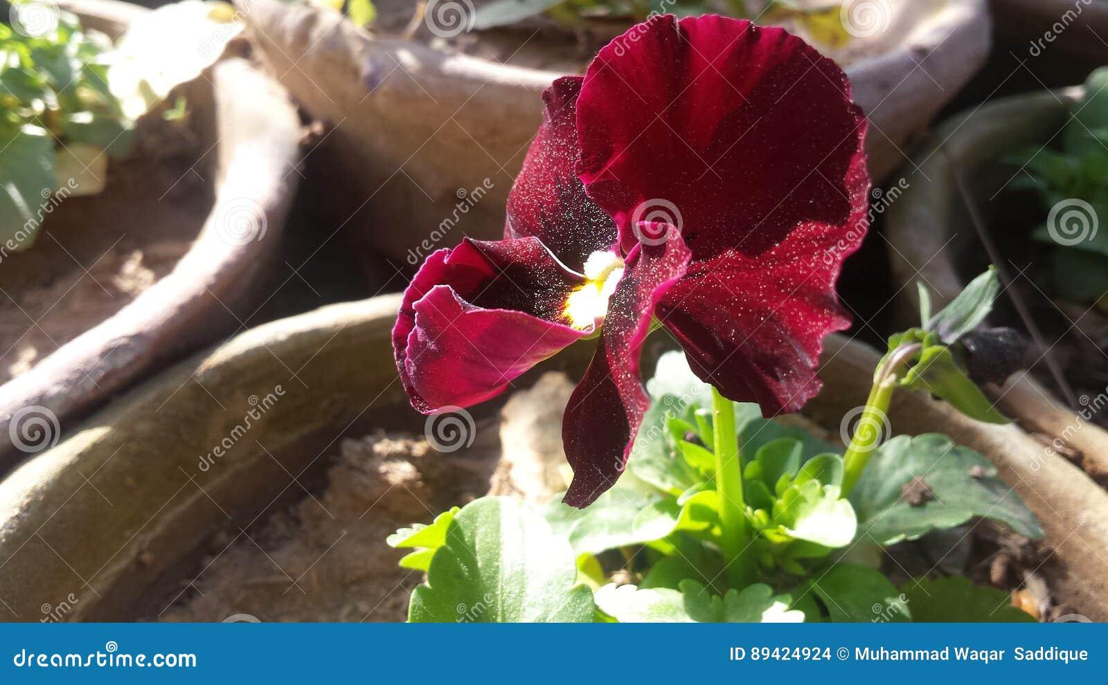 Flores bonitas vermelhas