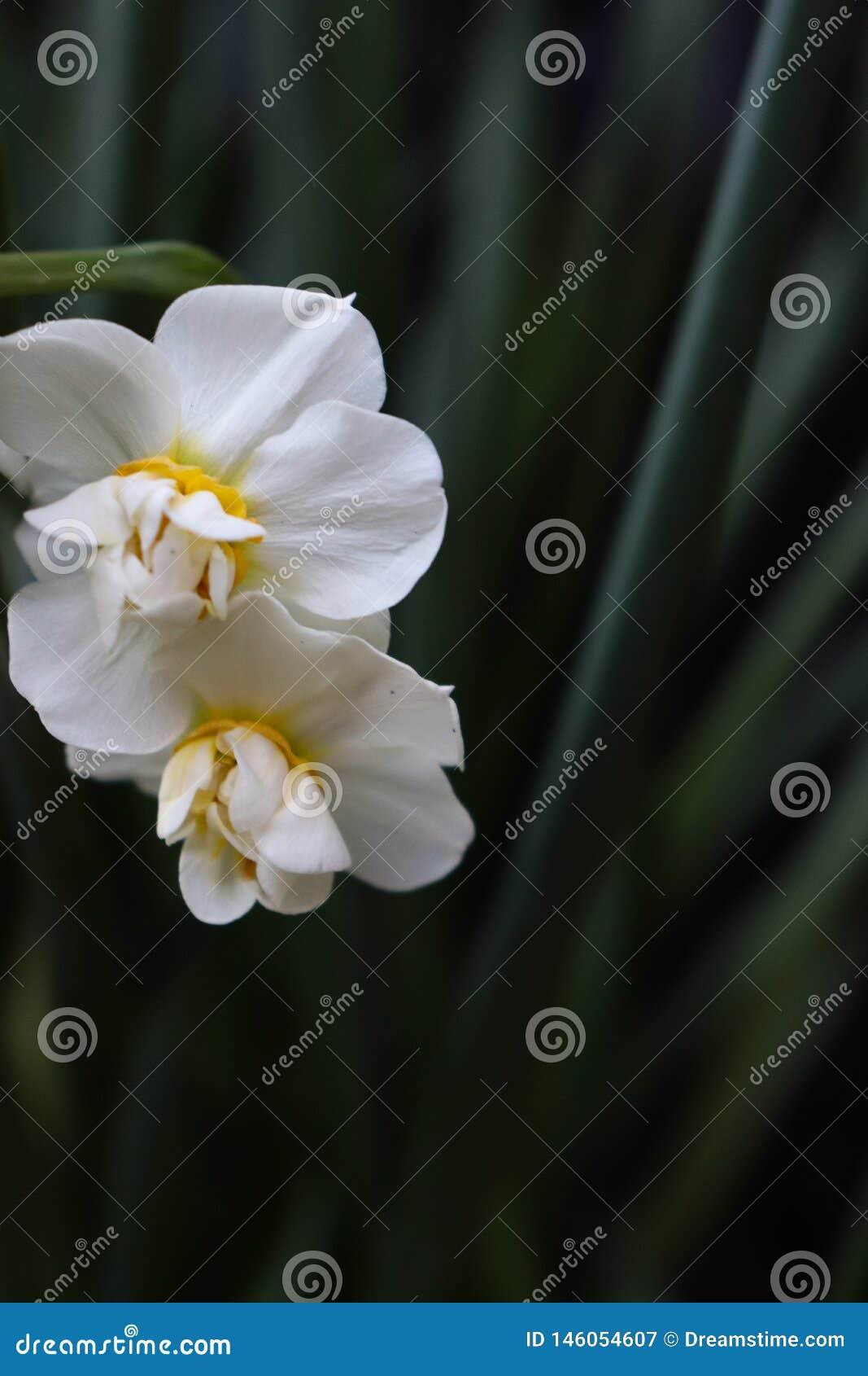Flores brancas com ramo verde