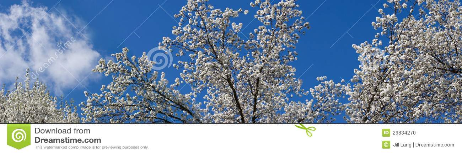 A árvore floresce panorama
