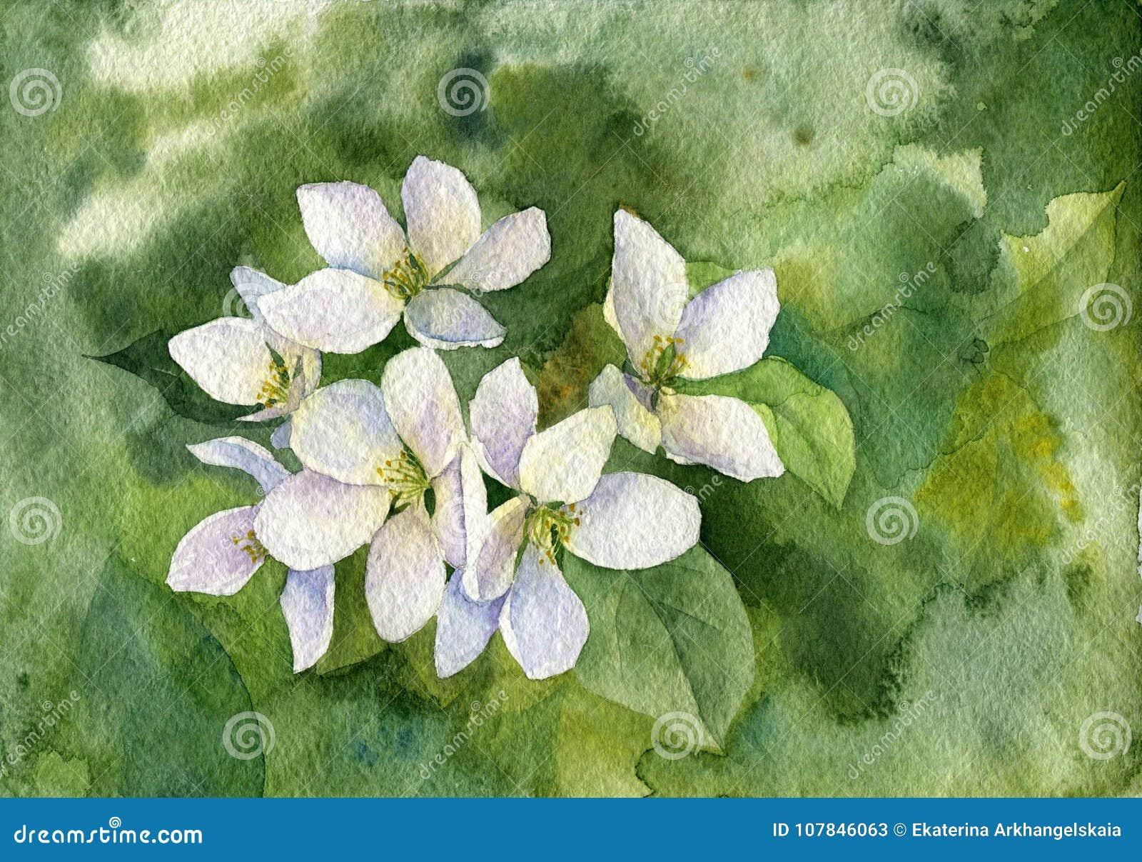 Flores brancas da maçã da aquarela
